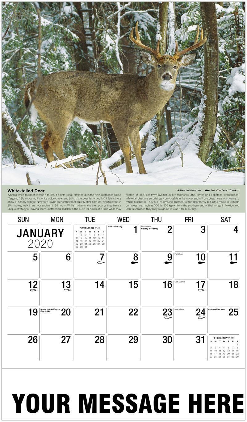 2020 Promotional Calendar - White-Tailed Deer - January