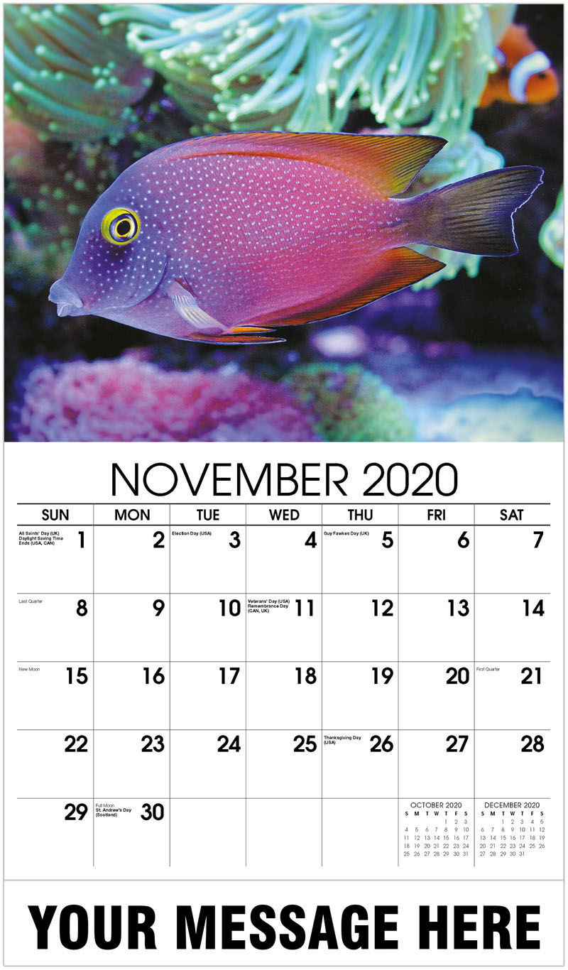2020 Advertising Calendar - Saltwater Fish - November