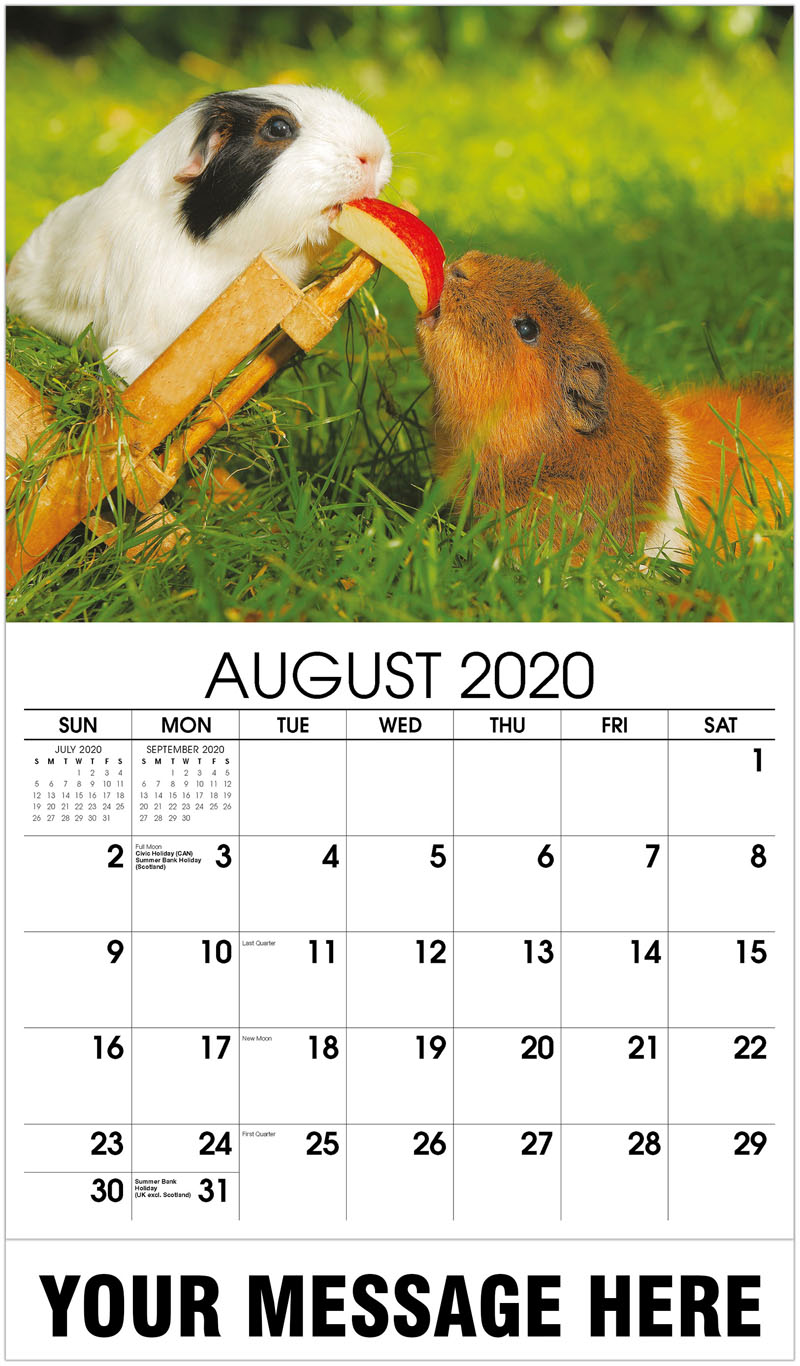 2020 Business Advertising Calendar - Guinea Pigs - August