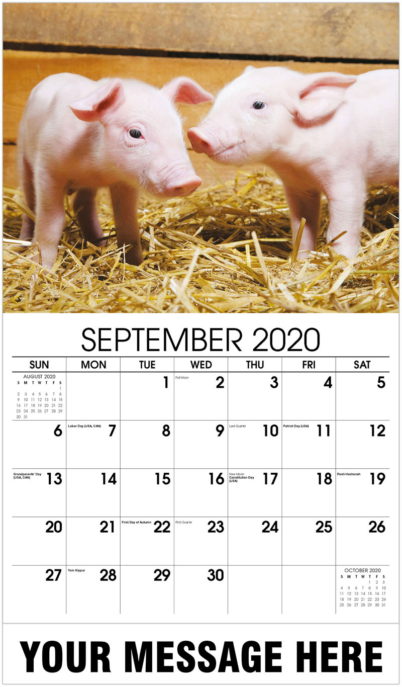 2020 Business Advertising Calendar - Piglets - September