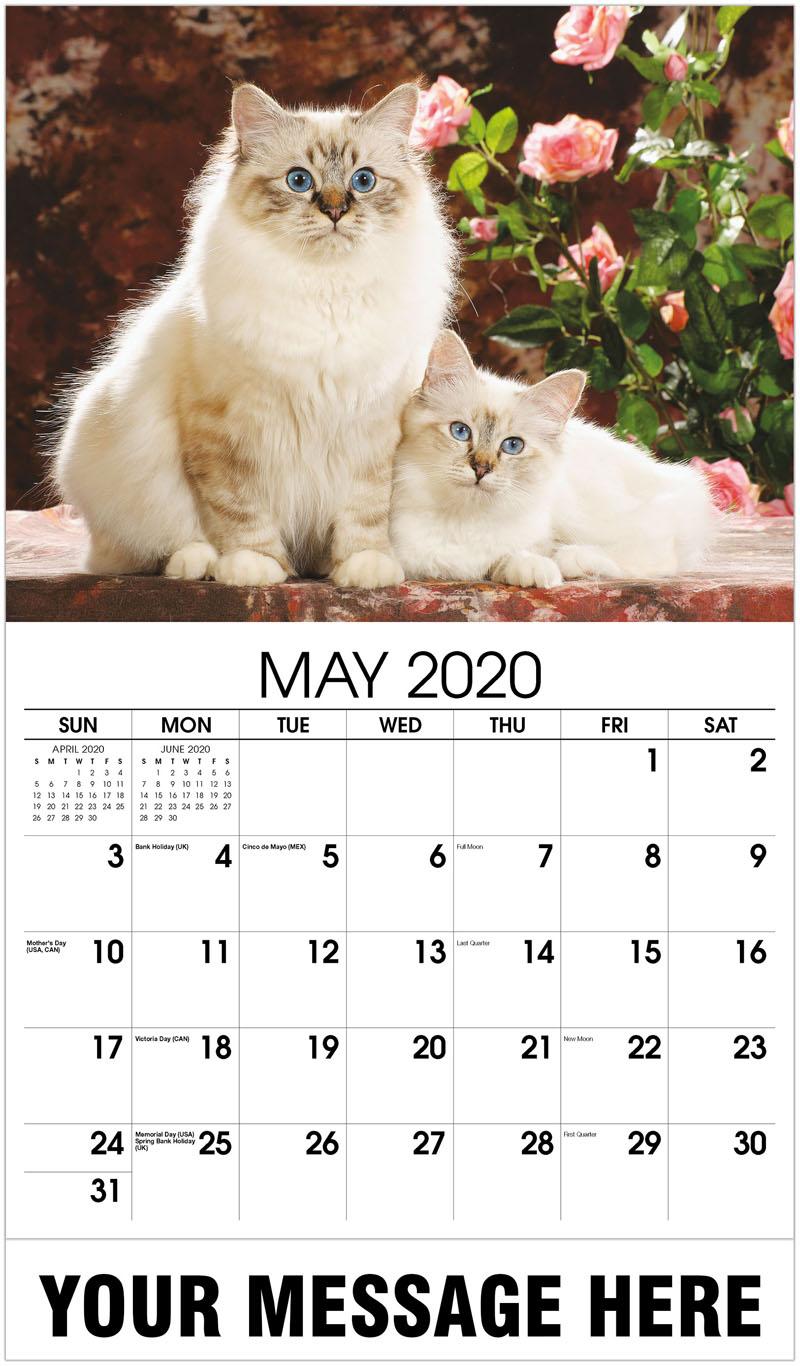 2020 Promo Calendar - 2 Cats - May