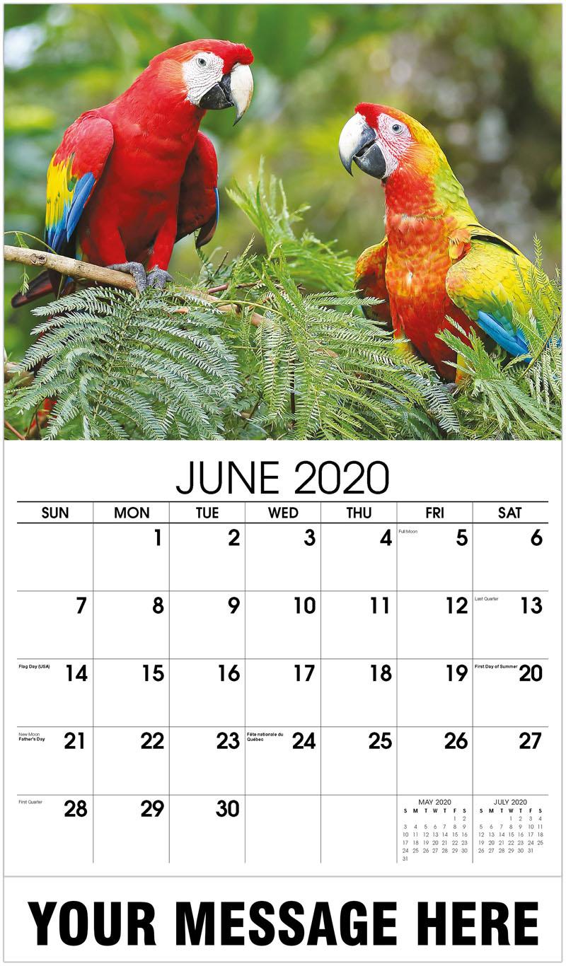 2020 Promo Calendar - Scarlet Macaws - June