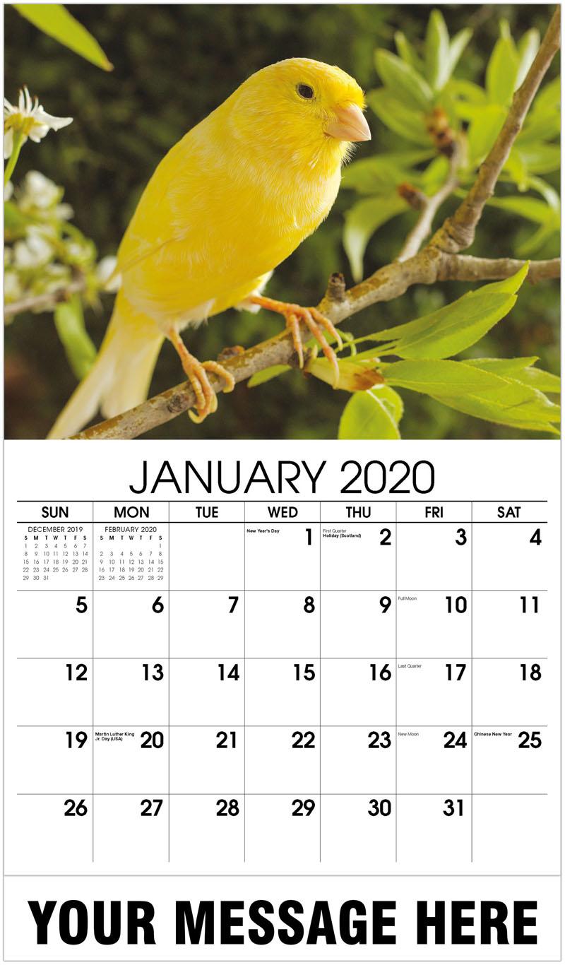 2020 Promotional Calendar - Canary - January