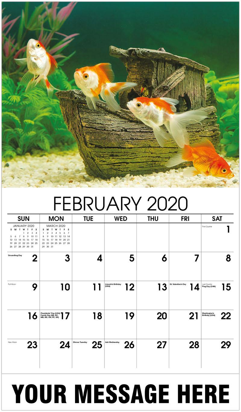 2020 Promotional Calendar - Goldfish In Freshwater Aquarium - February