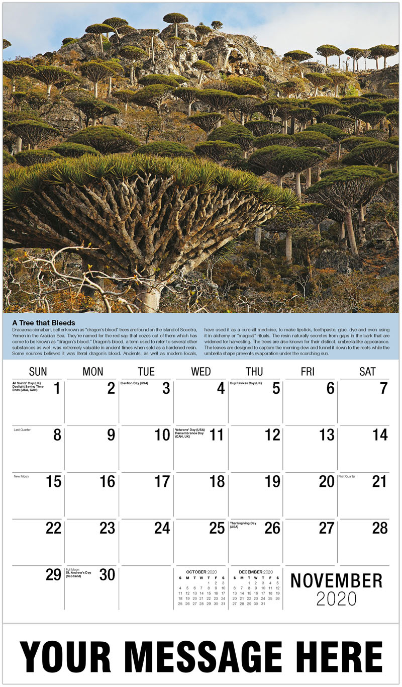 2020 Advertising Calendar - Dragon'S Blood Trees - November