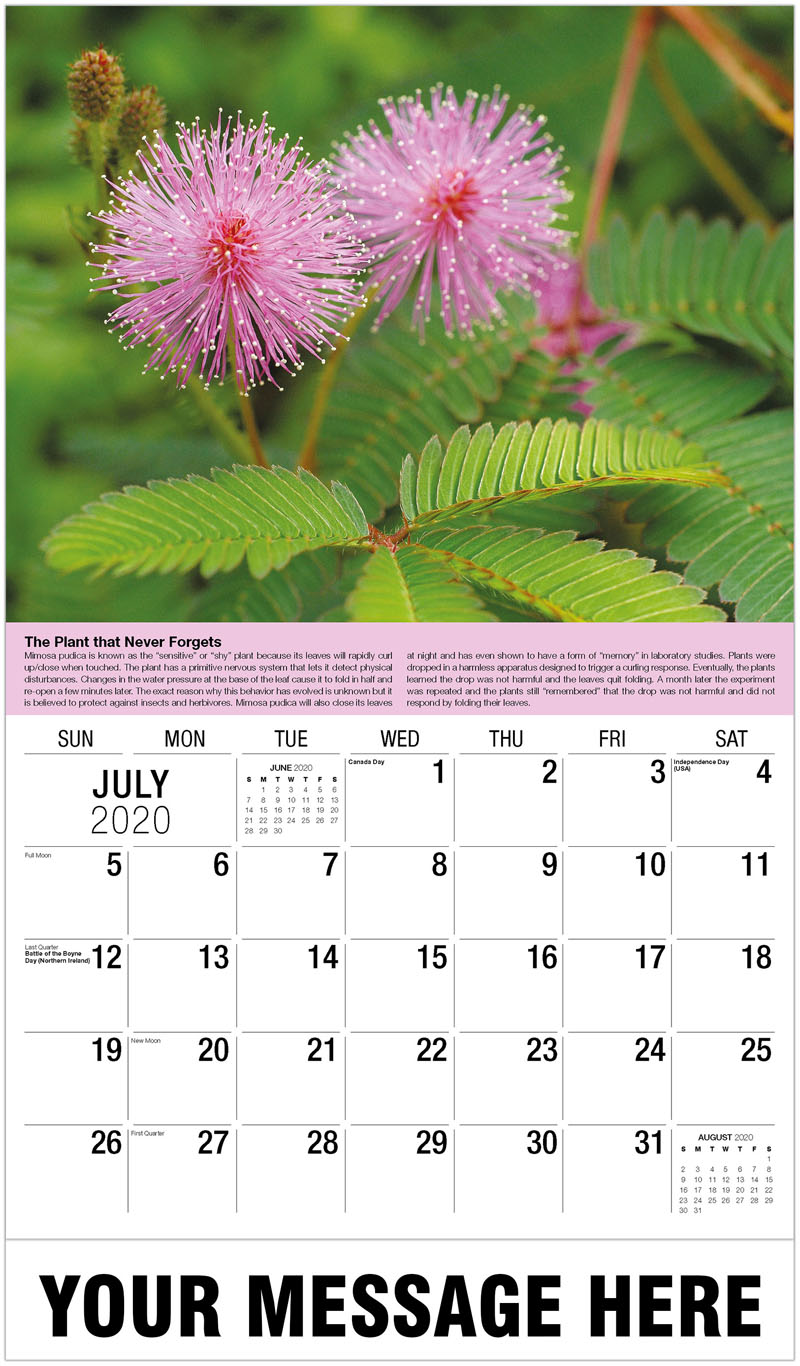 2020 Business Advertising Calendar - Mimosa Pudica - July