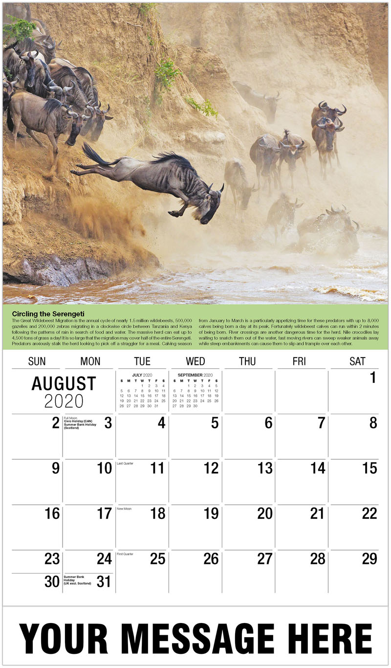 2020 Business Advertising Calendar - Blue Wildebeest - August