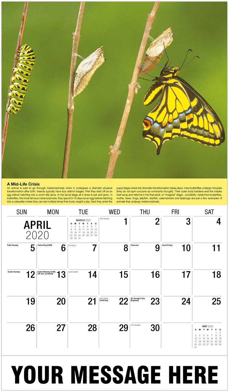 2020 Promo Calendar - Butterfly Metamorphosis - April