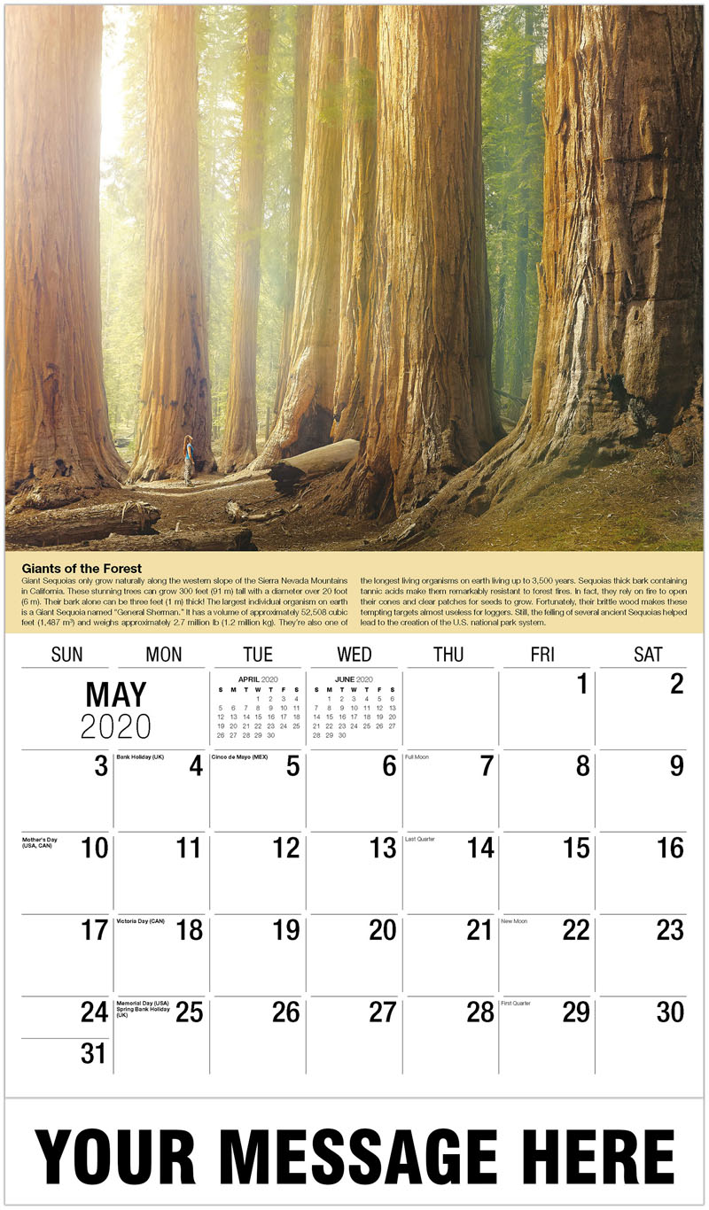 2020 Promo Calendar - Giant Sequoia Trees - May