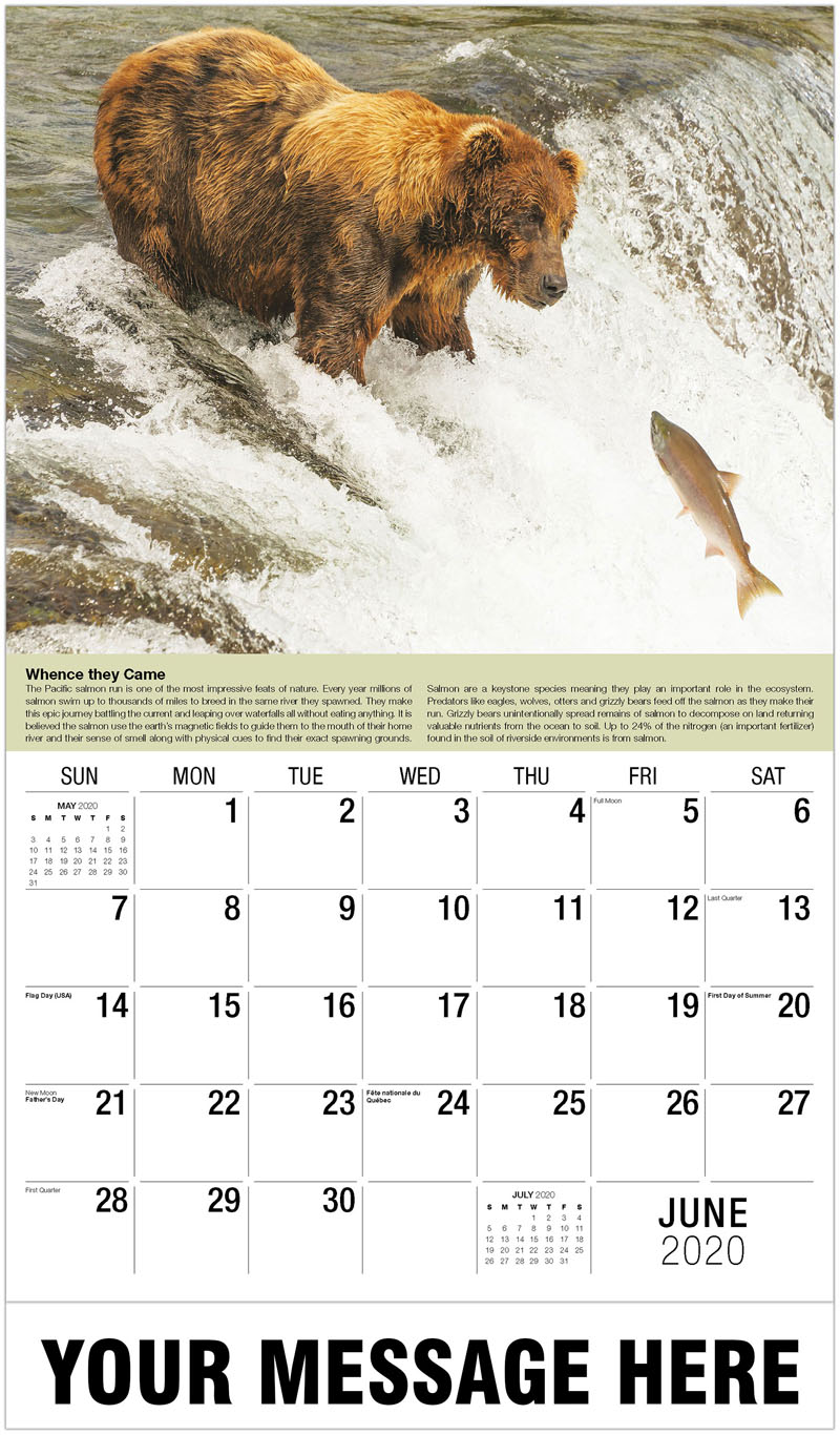 2020 Promo Calendar - Brown Bear/Salmon - June