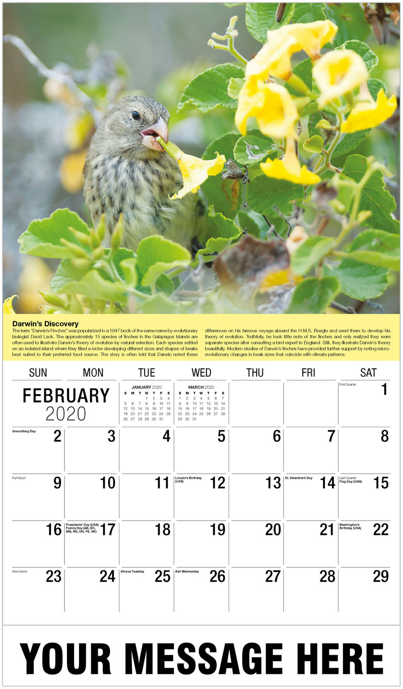 2020 Promotional Calendar - Galapagos Finch - February
