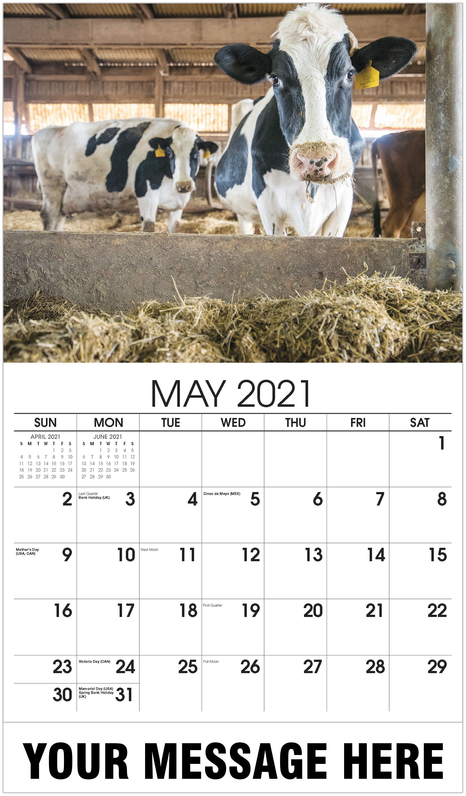 Cow - May - Country Spirit 2021 Promotional Calendar