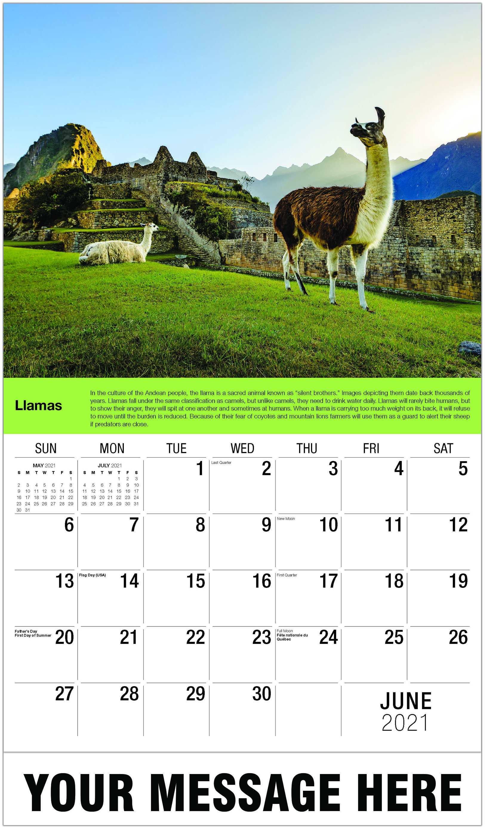Llamas - June - International Wildlife 2021 Promotional Calendar
