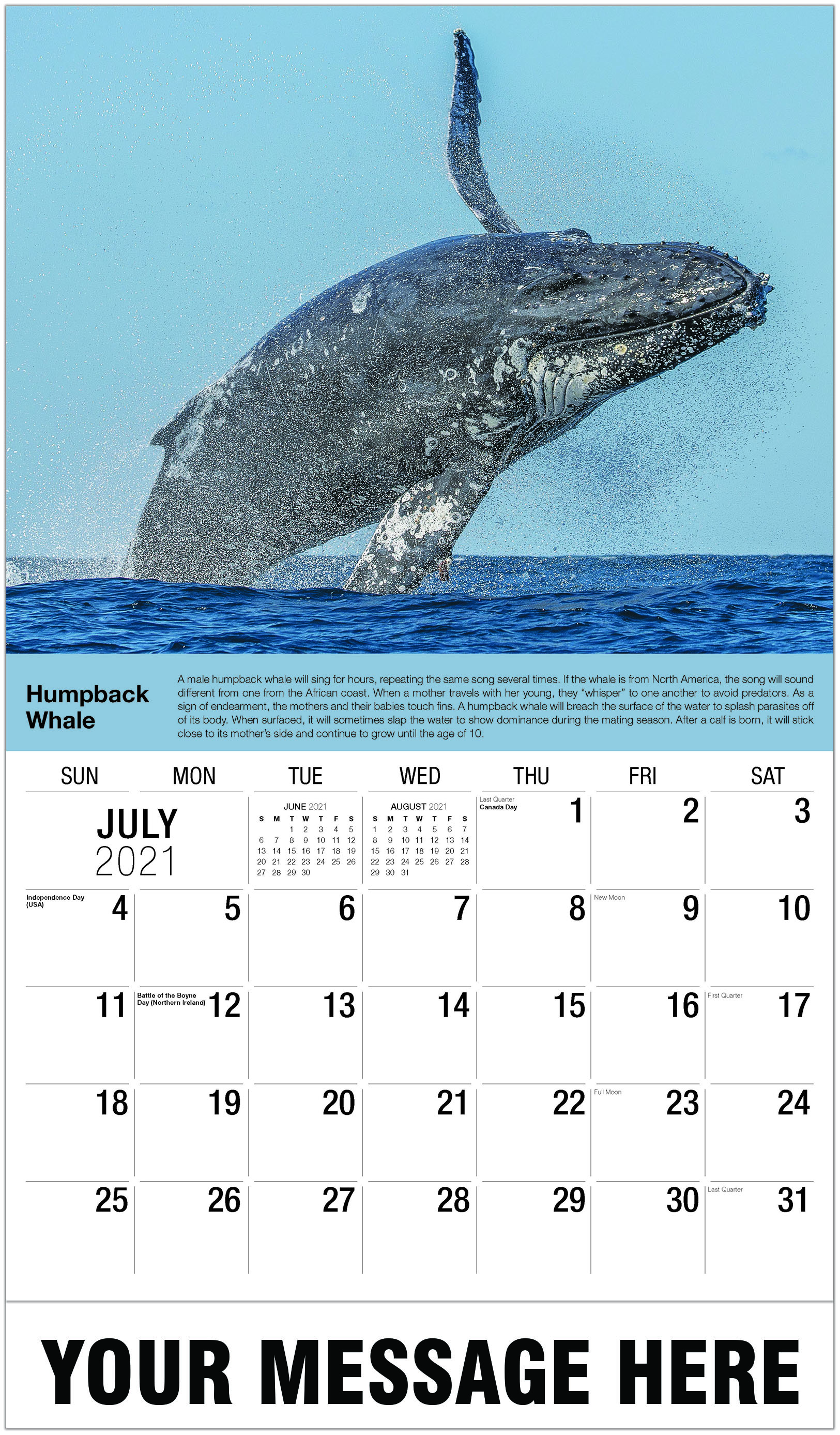 Humpback Whale - July - International Wildlife 2021 Promotional Calendar