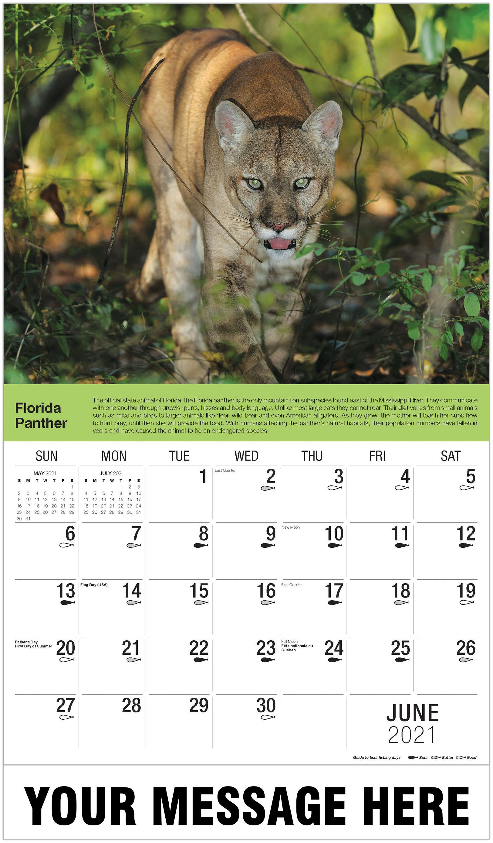 Florida Panther - June - North American Wildlife 2021 Promotional Calendar