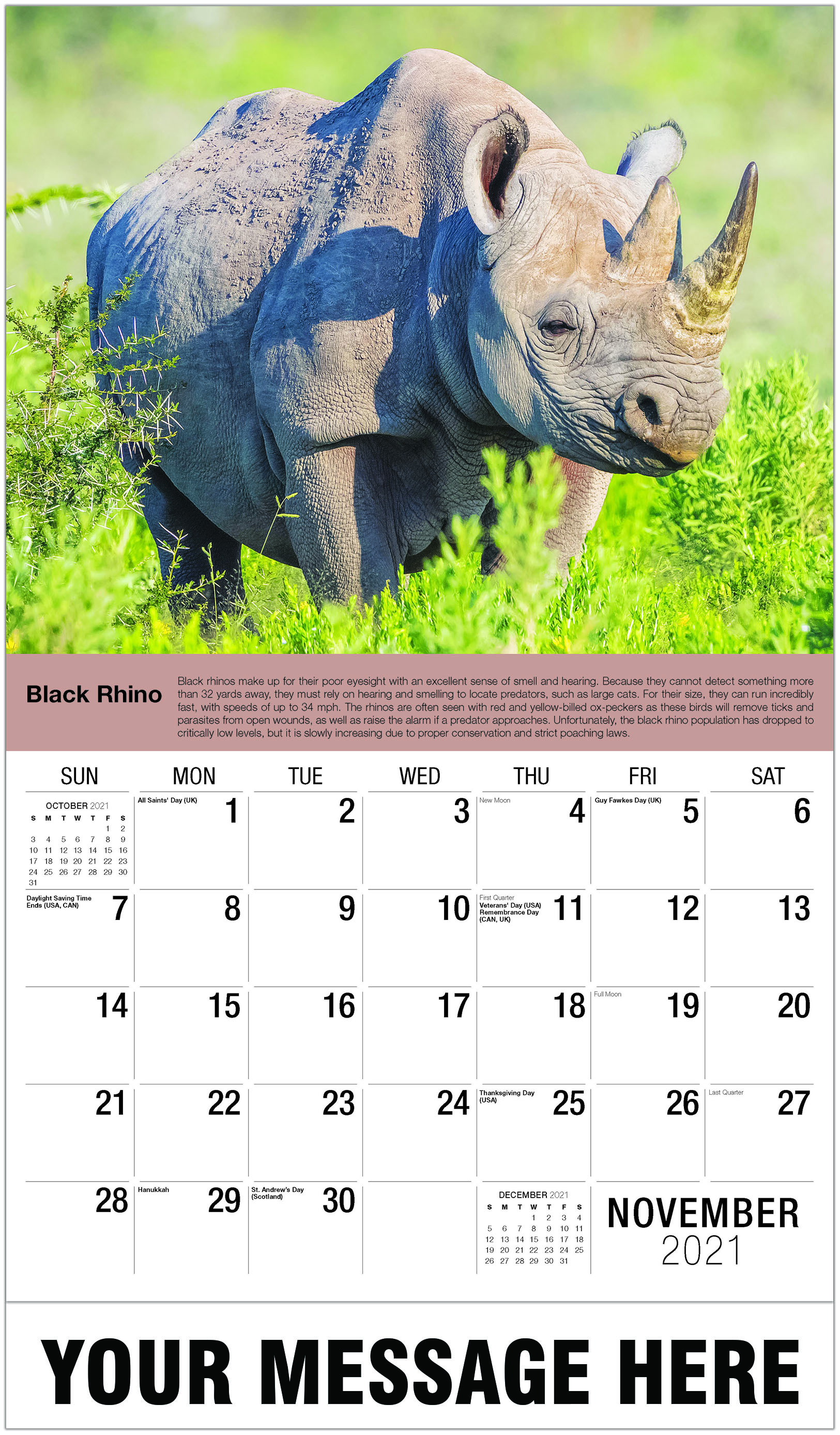 Black Rhino - November - International Wildlife 2021 Promotional Calendar