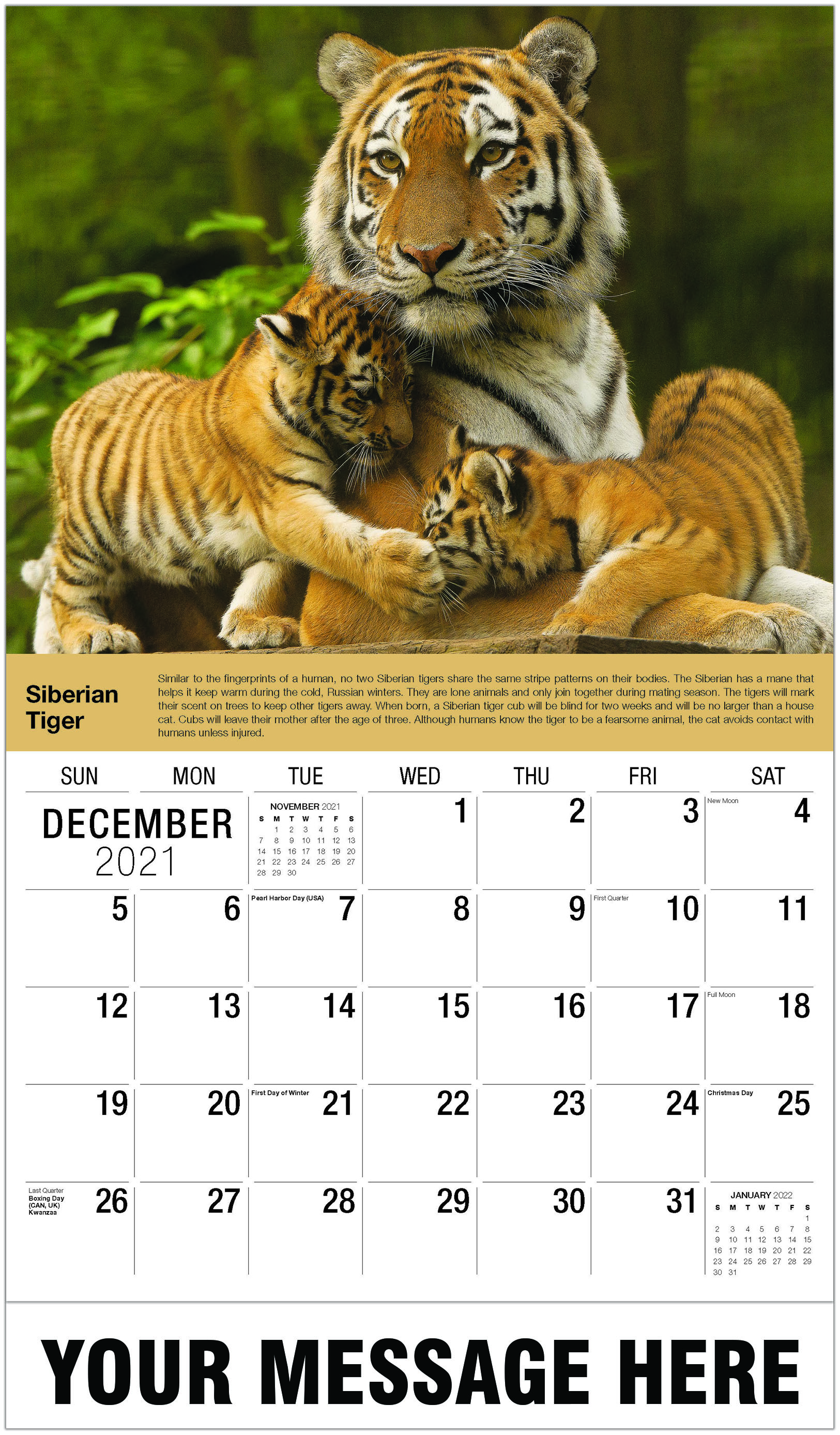 Siberian Tiger - December 2021 - International Wildlife 2021 Promotional Calendar