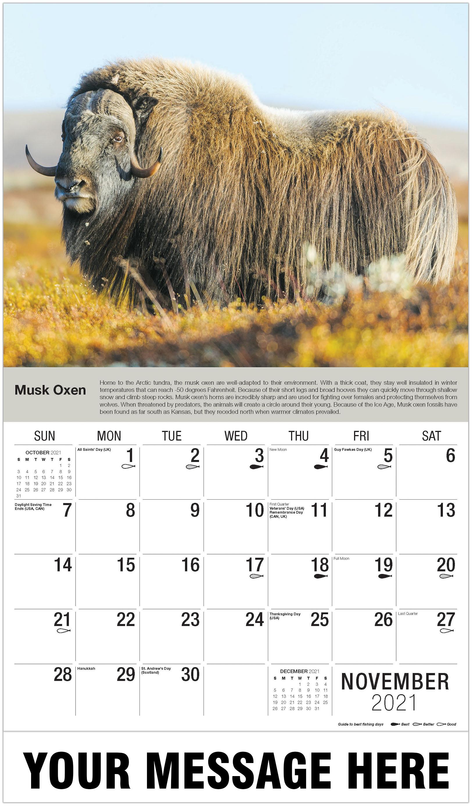 Musk Ox - November - North American Wildlife 2021 Promotional Calendar