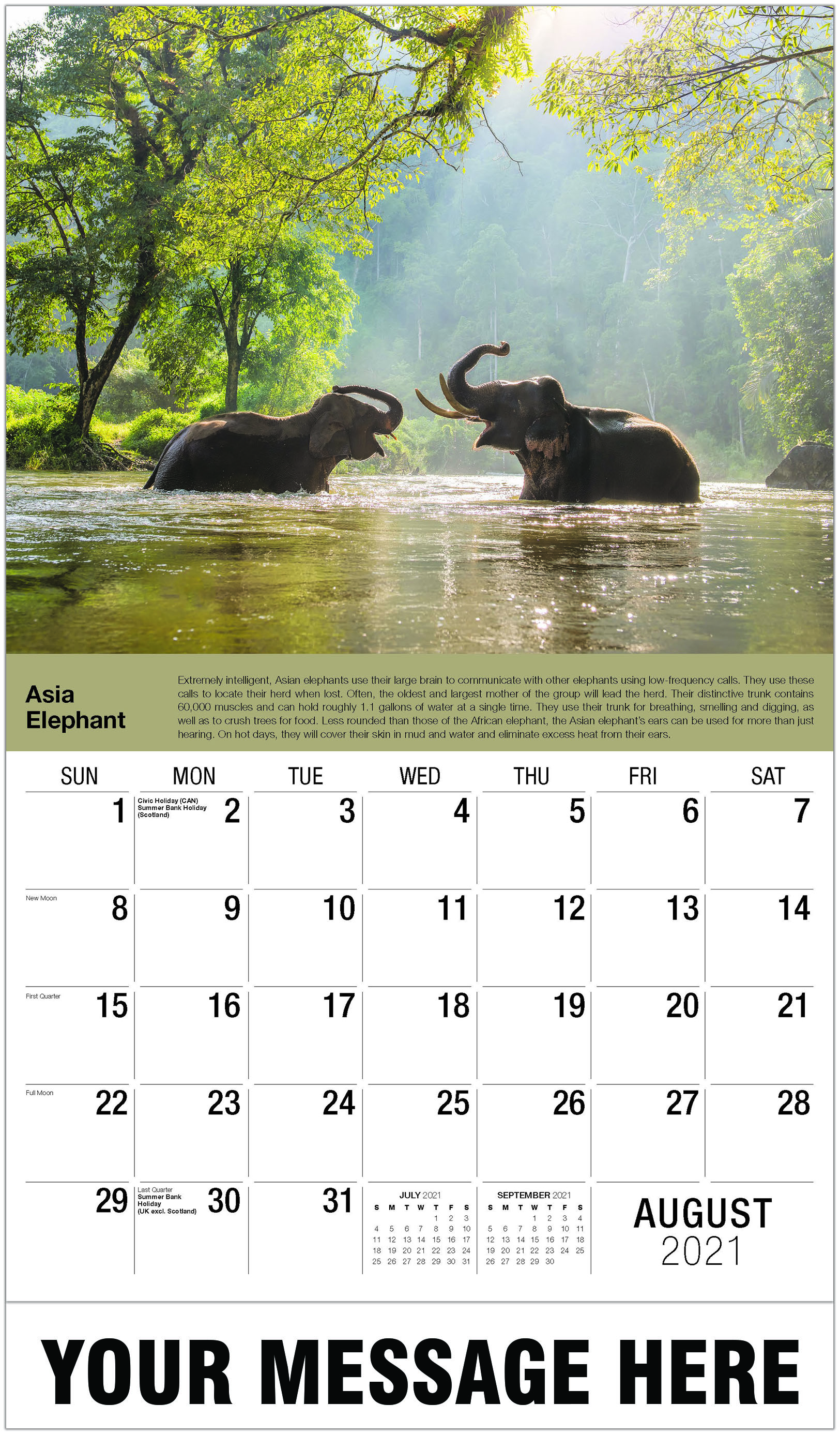 Asian Elephant - August - International Wildlife 2021 Promotional Calendar