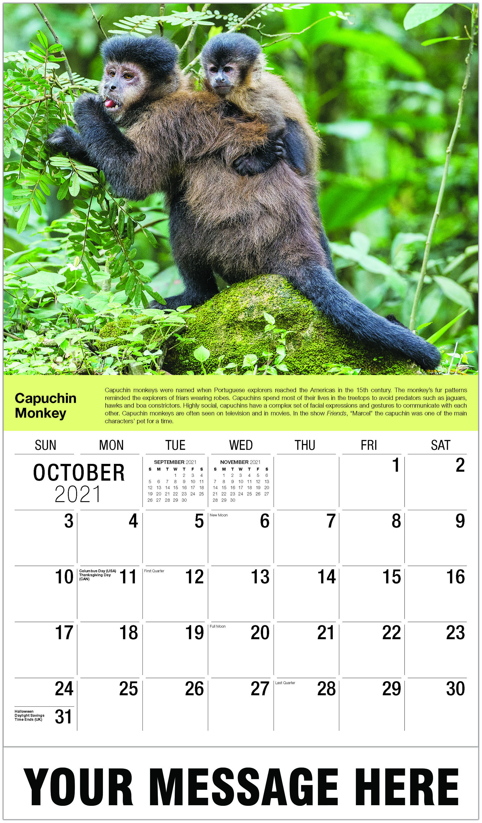Capuchin Monkey - October - International Wildlife 2021 Promotional Calendar