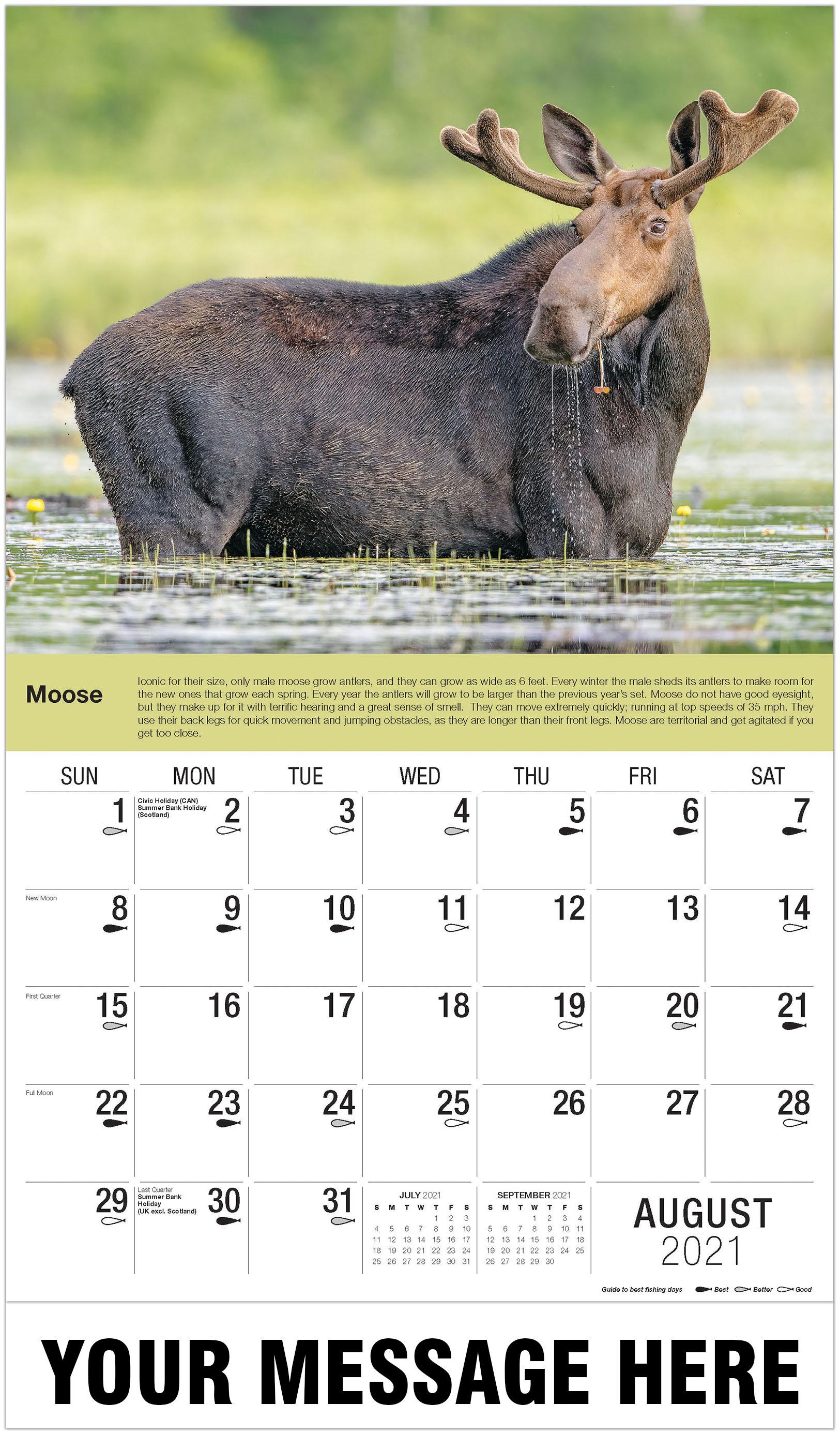 Moose - August - North American Wildlife 2021 Promotional Calendar