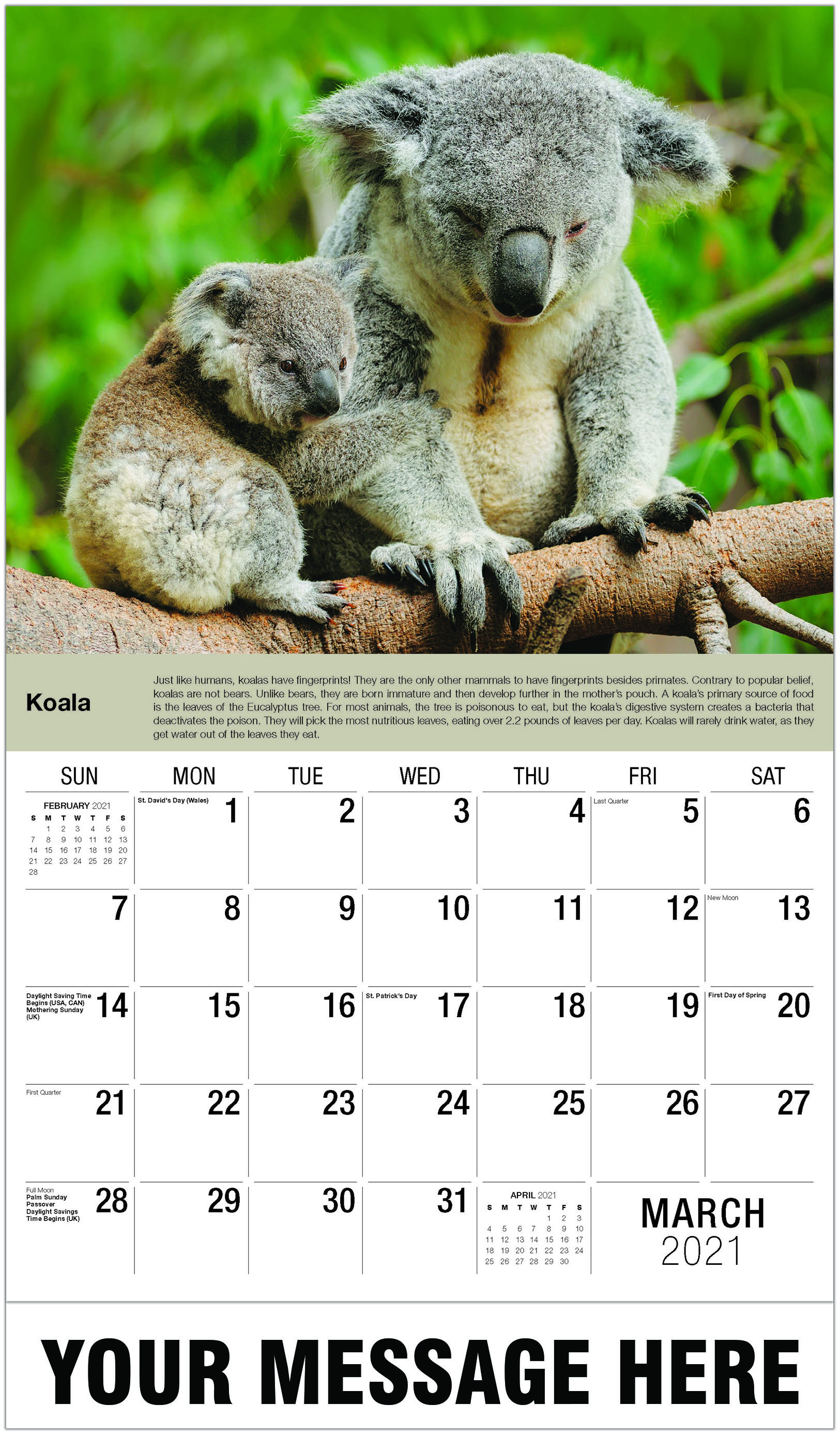 Koala - March - International Wildlife 2021 Promotional Calendar