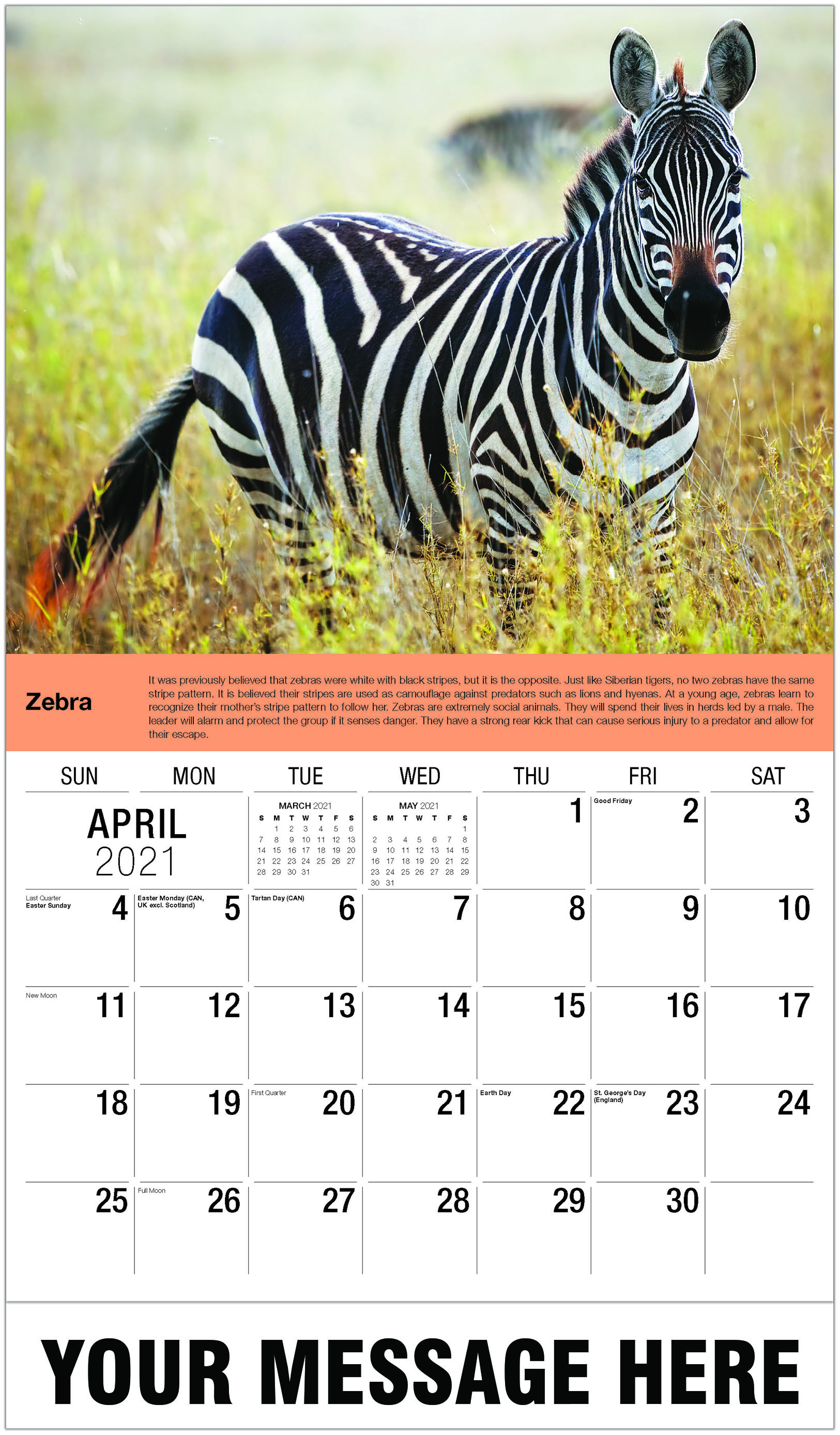 Zebra - April - International Wildlife 2021 Promotional Calendar