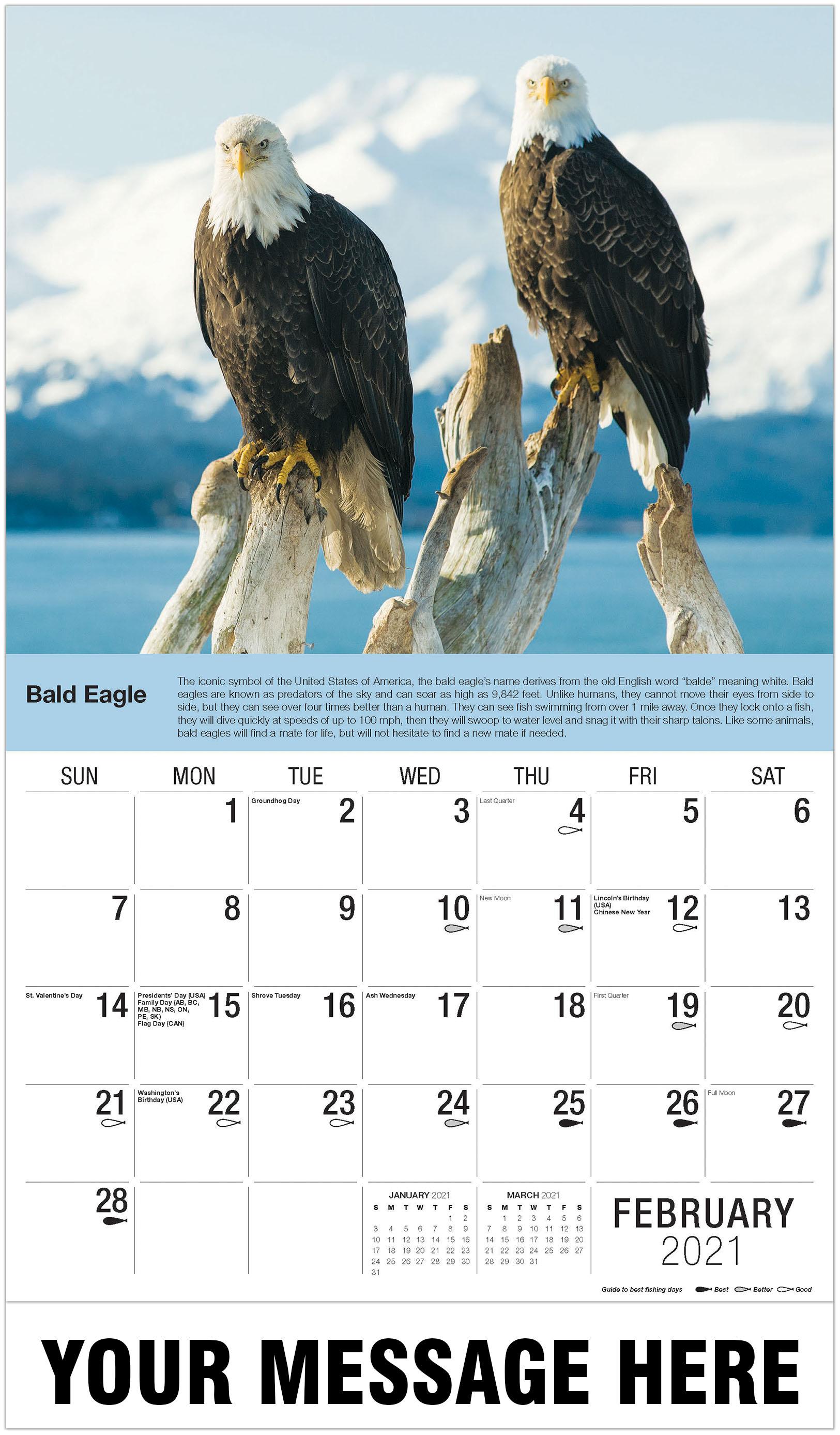 Bald Eagle - February - North American Wildlife 2021 Promotional Calendar