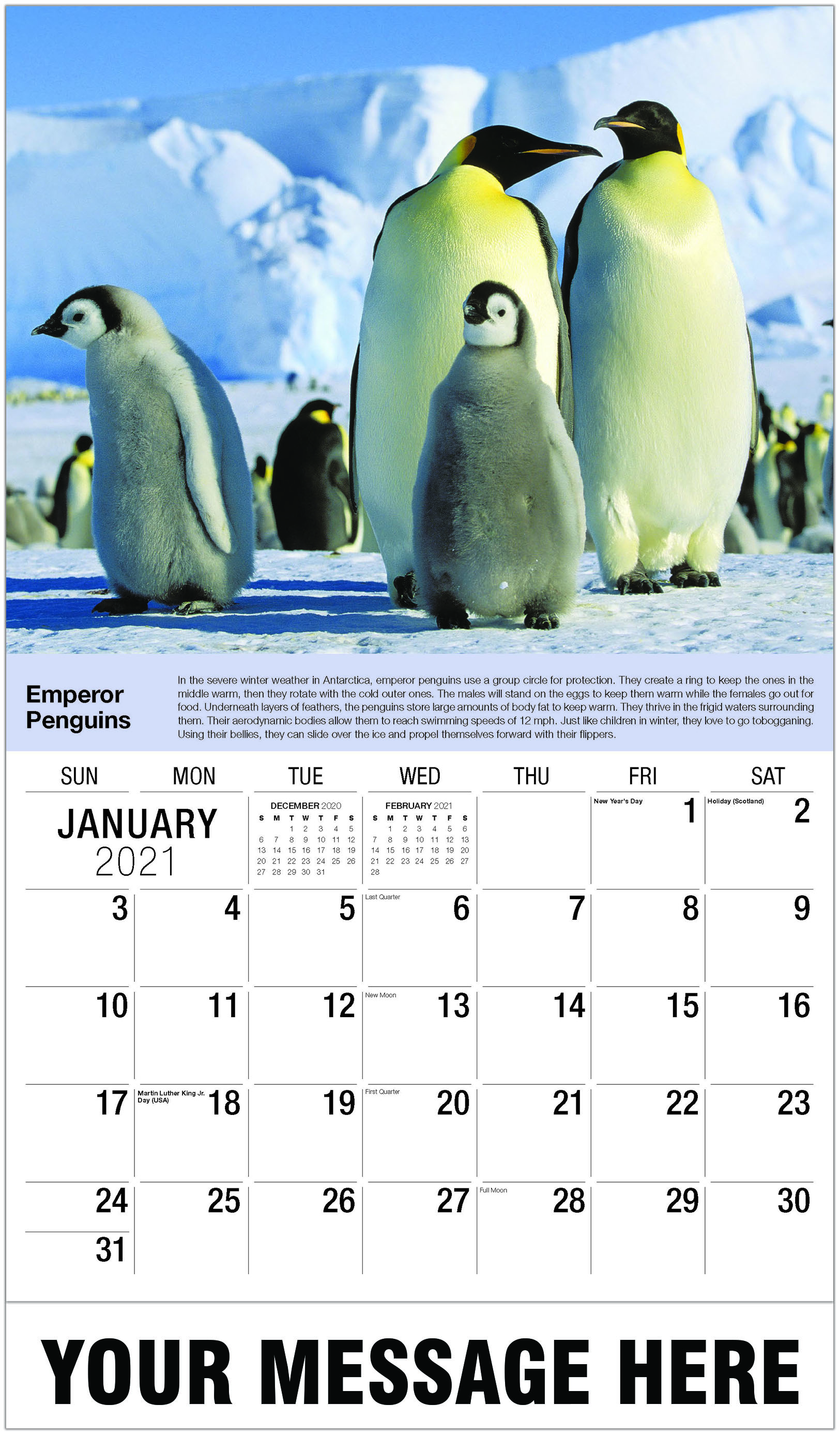 Emperor Penguins - January - International Wildlife 2021 Promotional Calendar