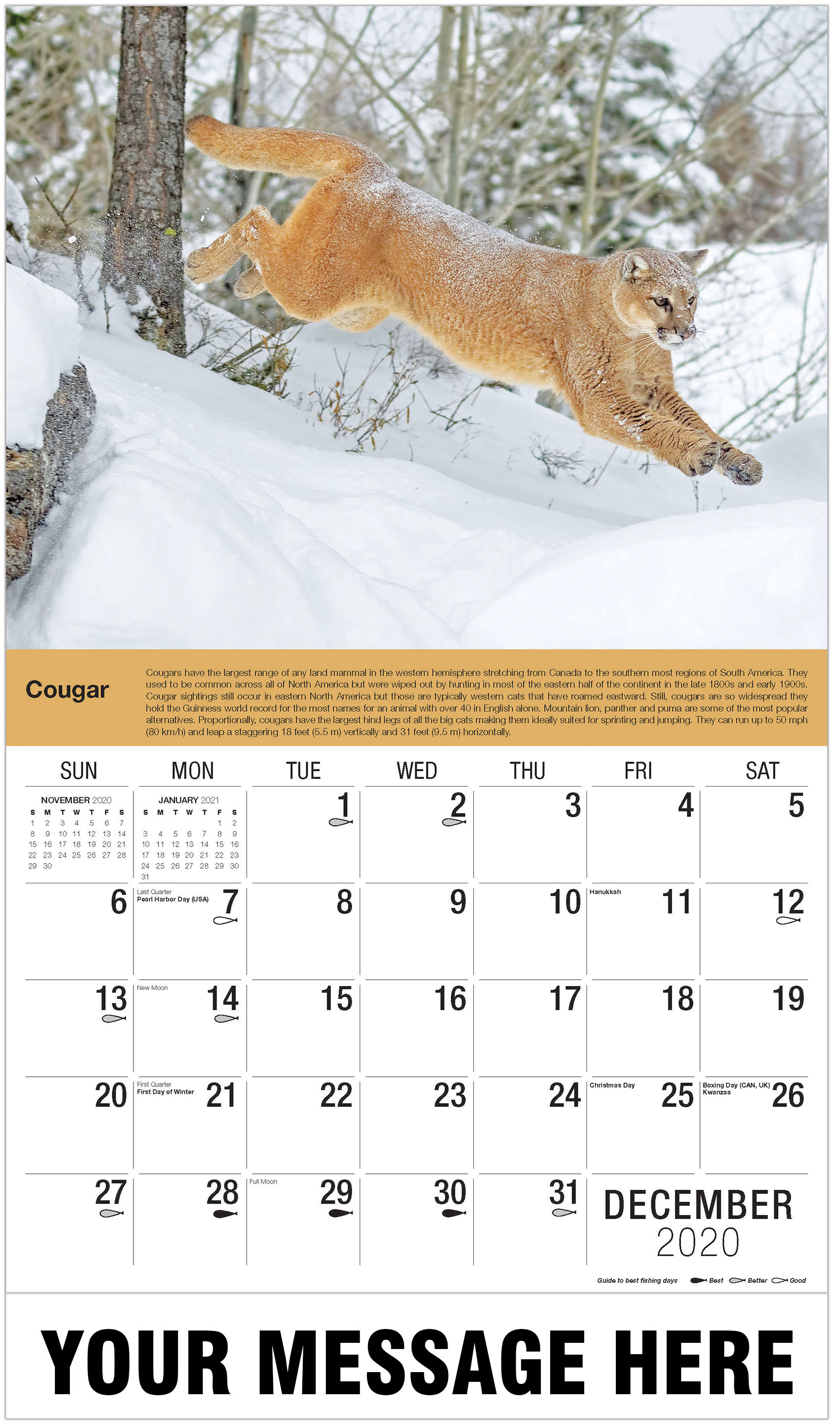 Mountain Lion in Winter - December 2020 - North American Wildlife 2021 Promotional Calendar