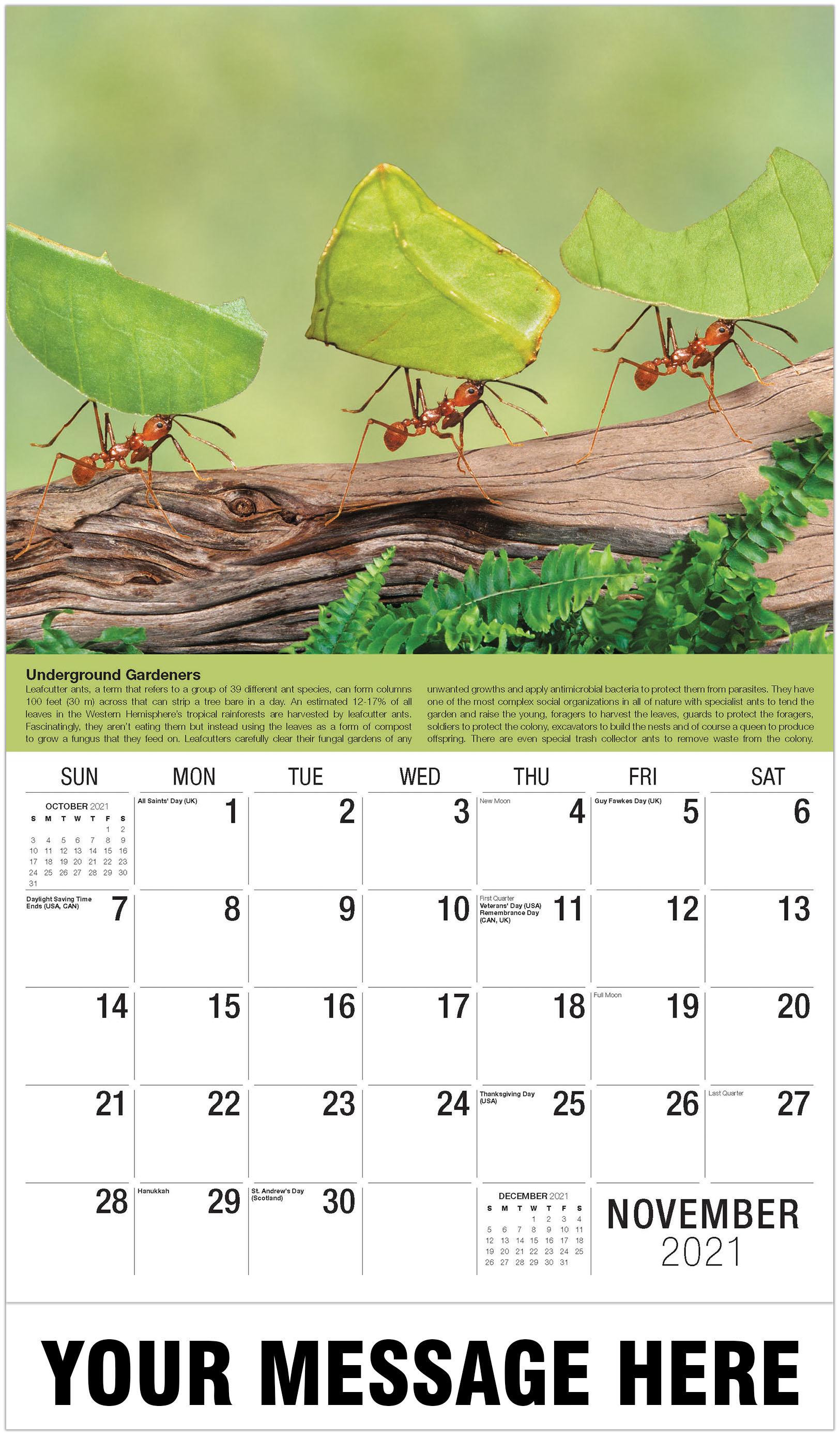 2021 Planet Earth Advertising Calendar | Business ...