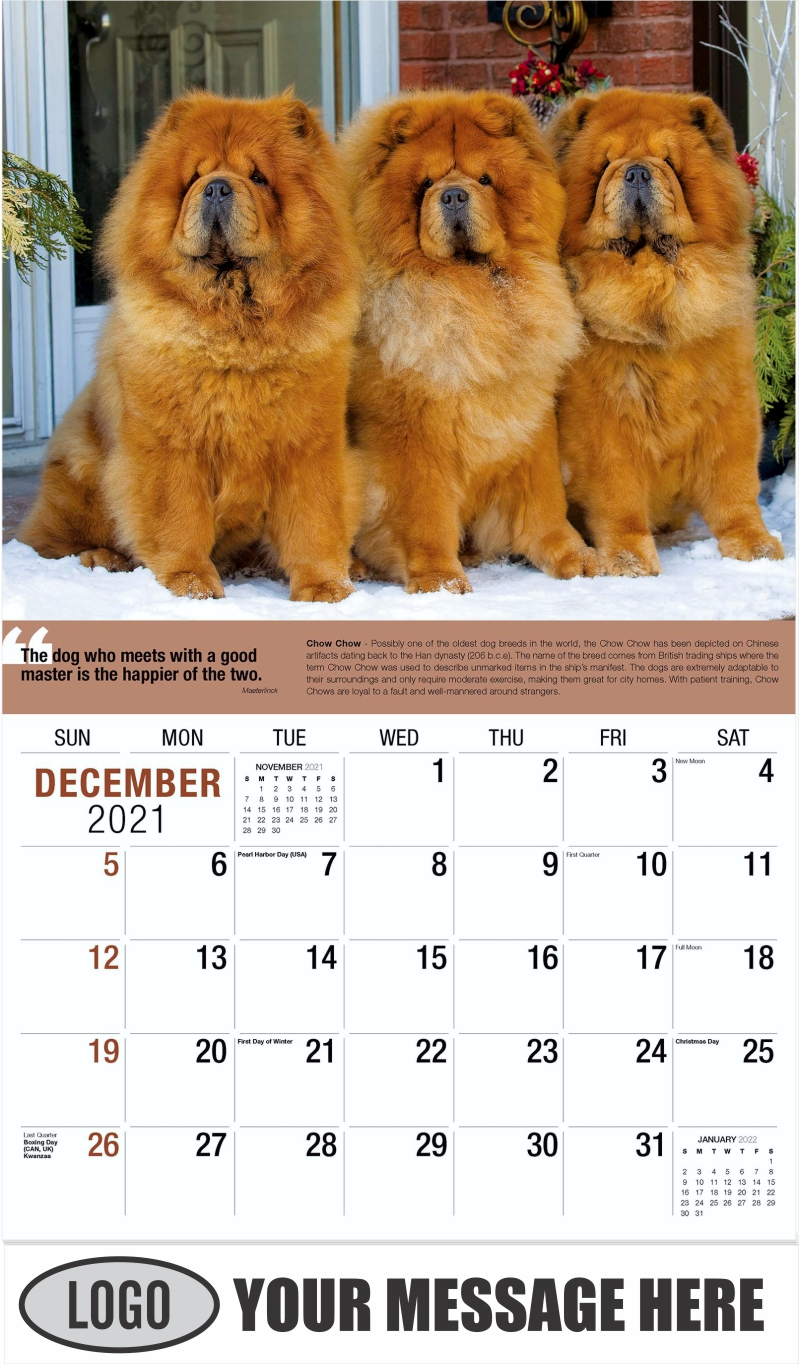 Chow Chow - December 2021 - Dogs,