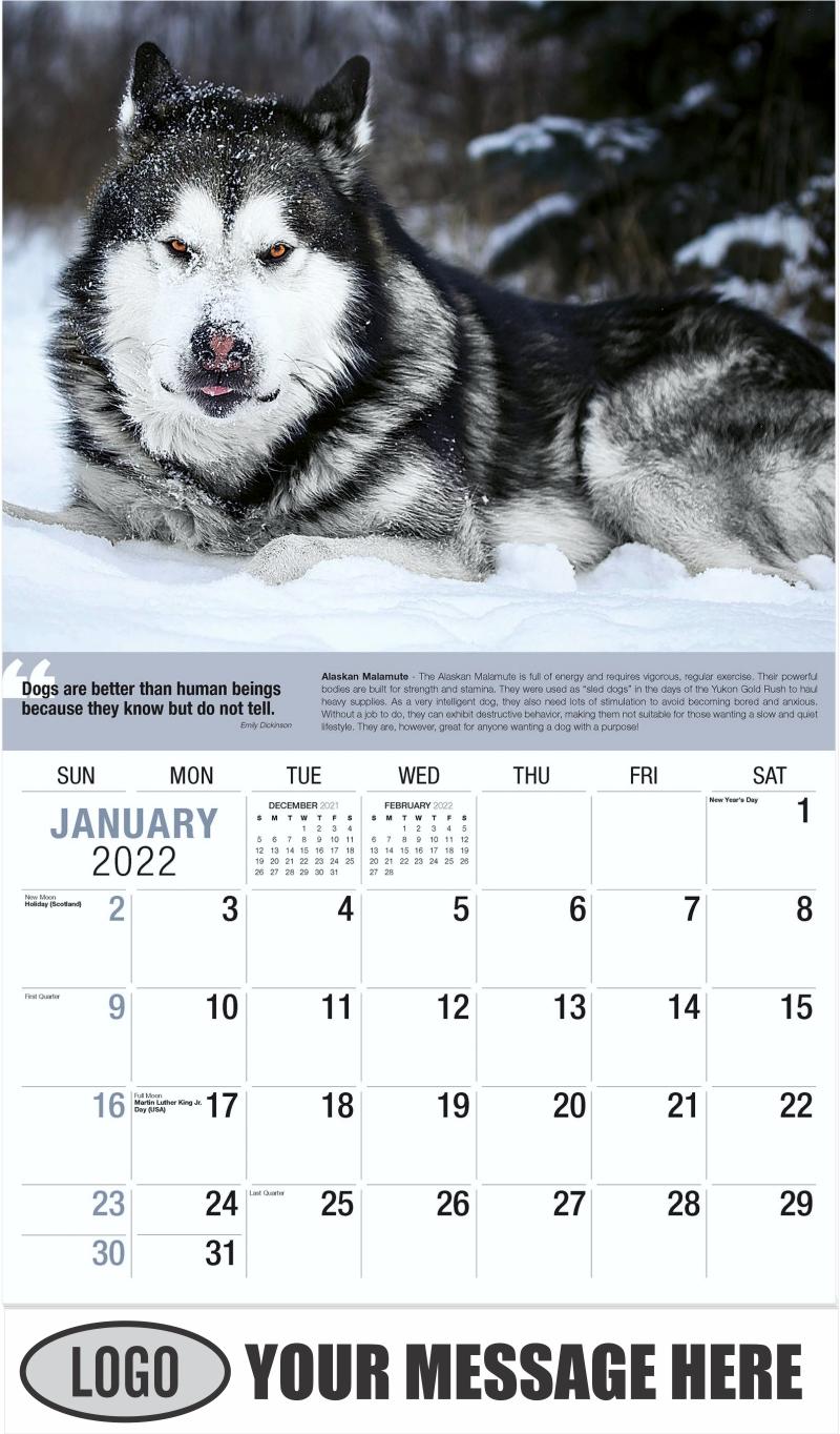 Alaskan Malamute - January - Dogs,