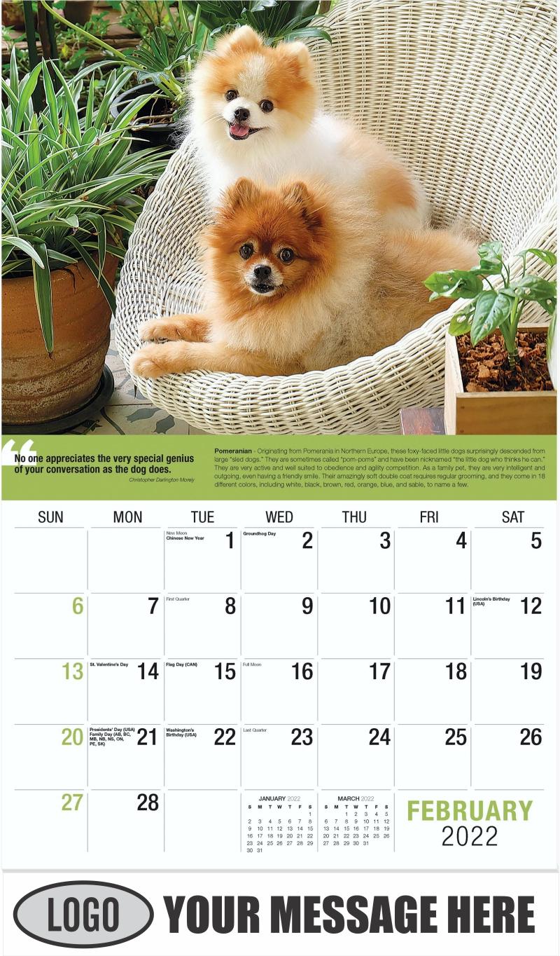 Pomeranian - February - Dogs,
