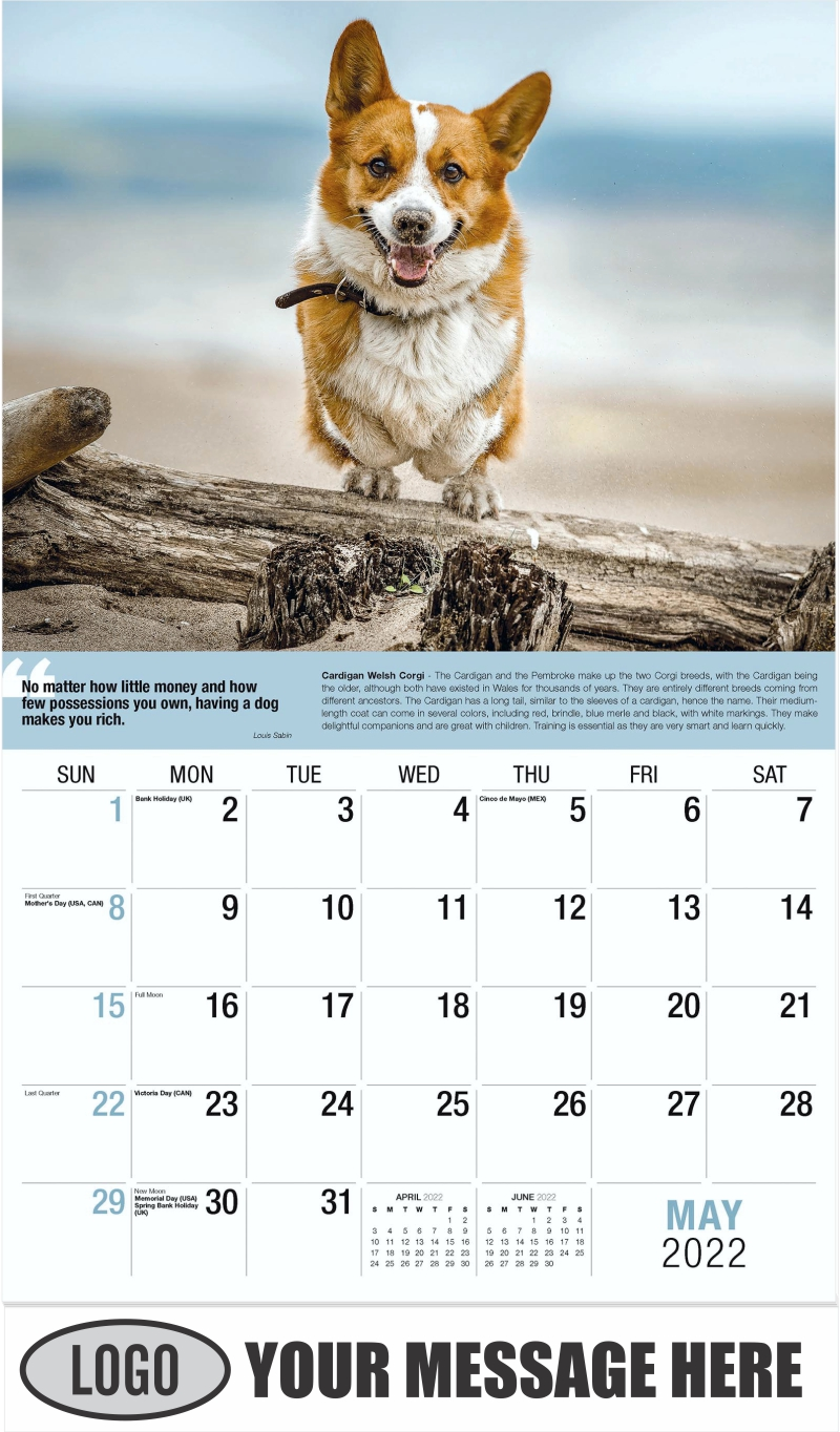 Cardigan Welsh Corgi - May - Dogs,