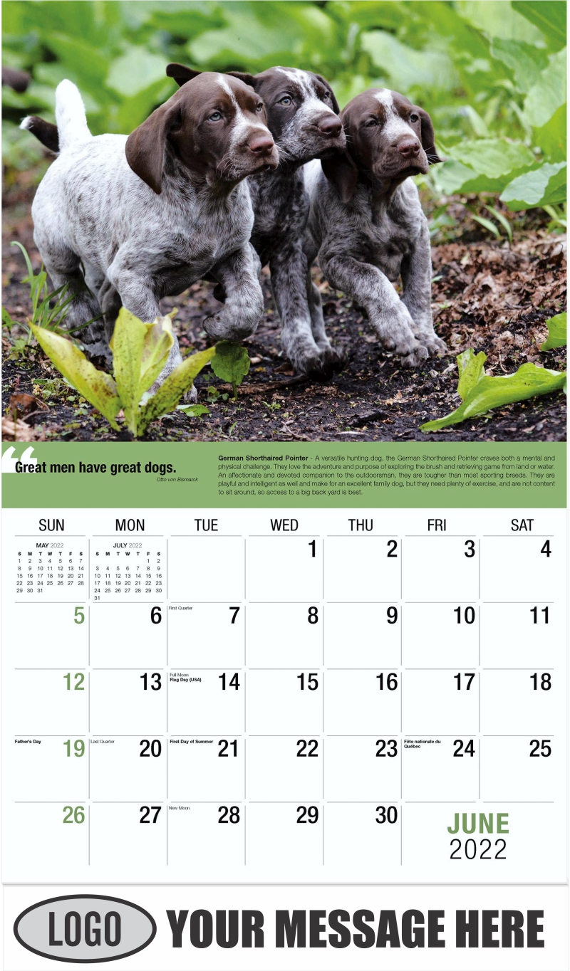 German Shorthaired Pointer - June - Dogs,