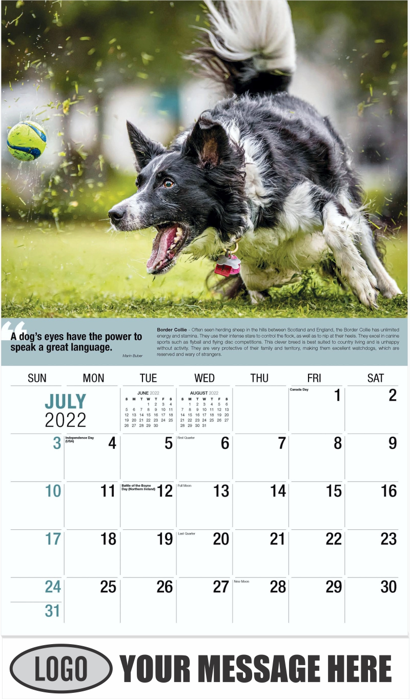 Border Collie - July - Dogs,