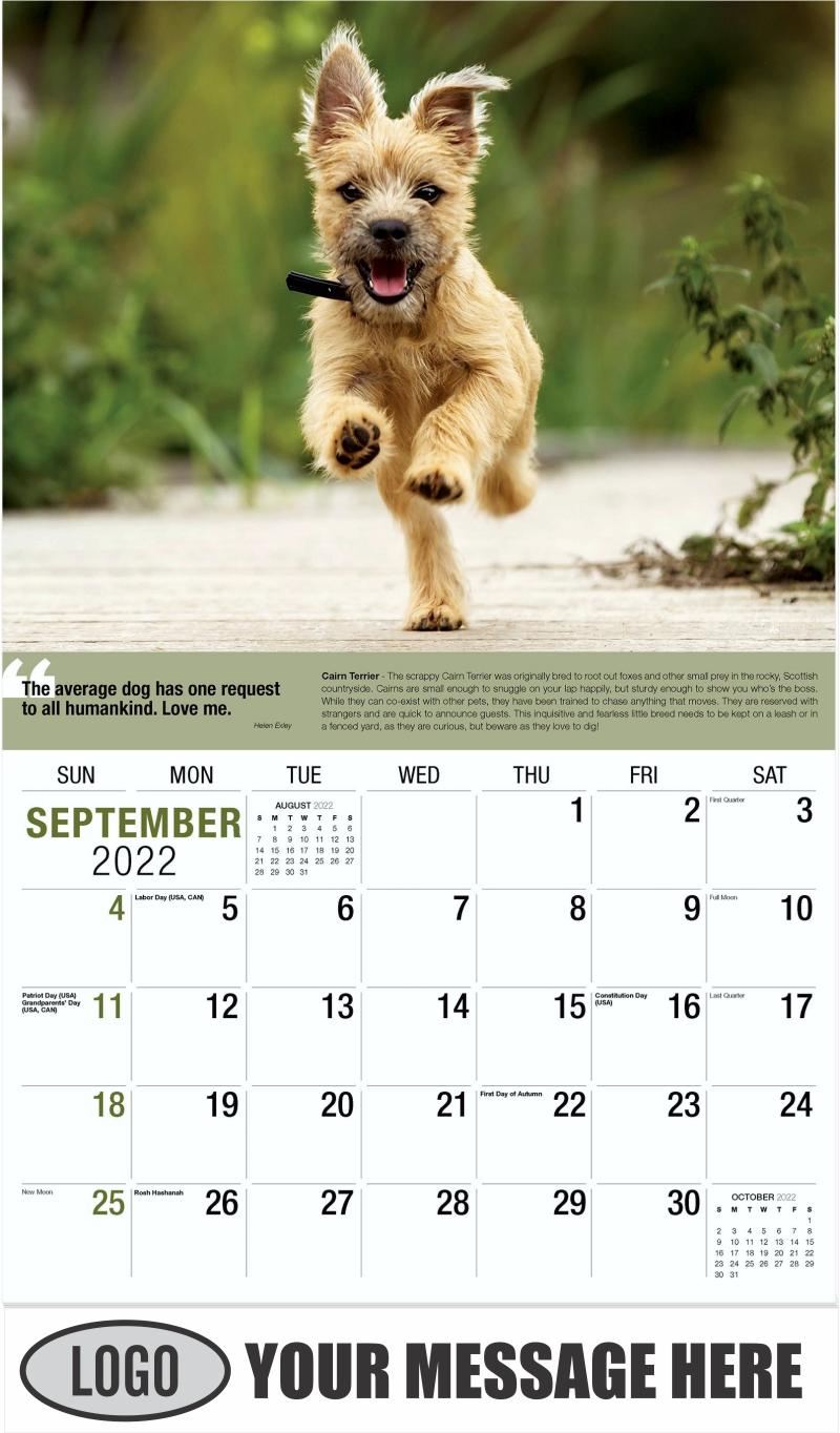 Cairn Terrier - September - Dogs,