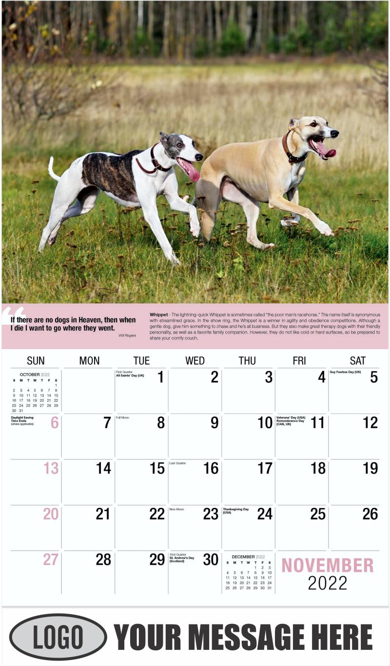 Whippet - November - Dogs,