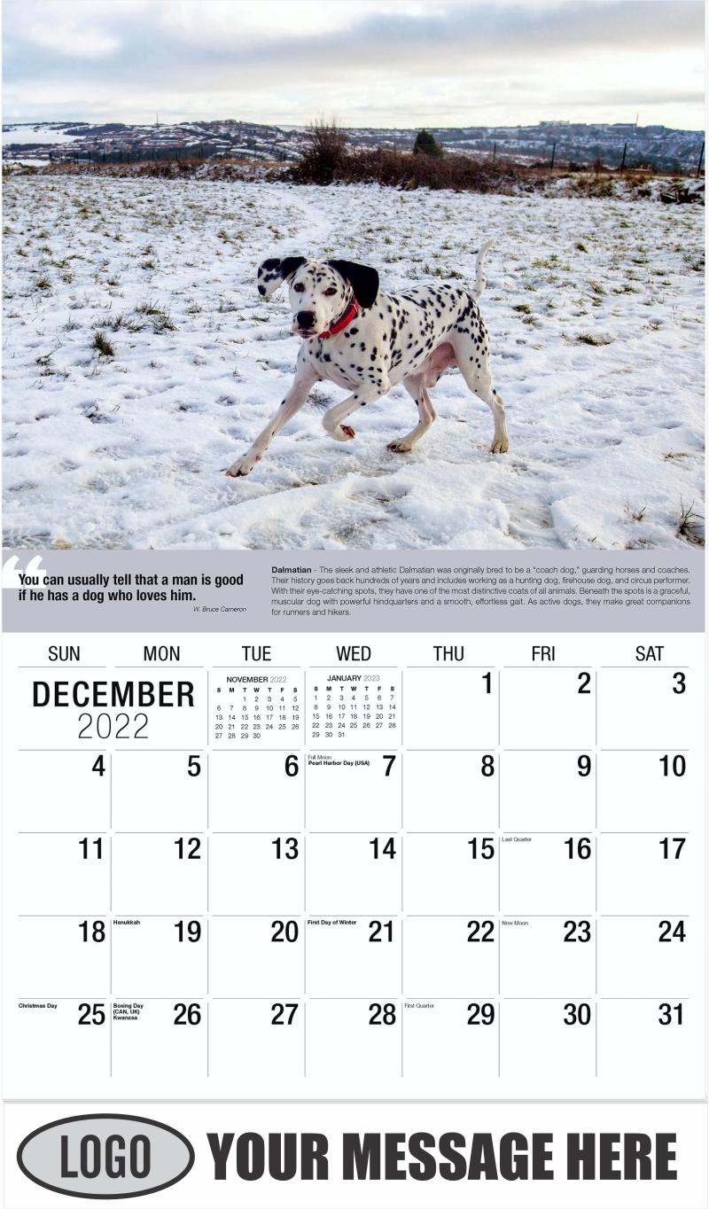 Dalmatian - December 2022 - Dogs,