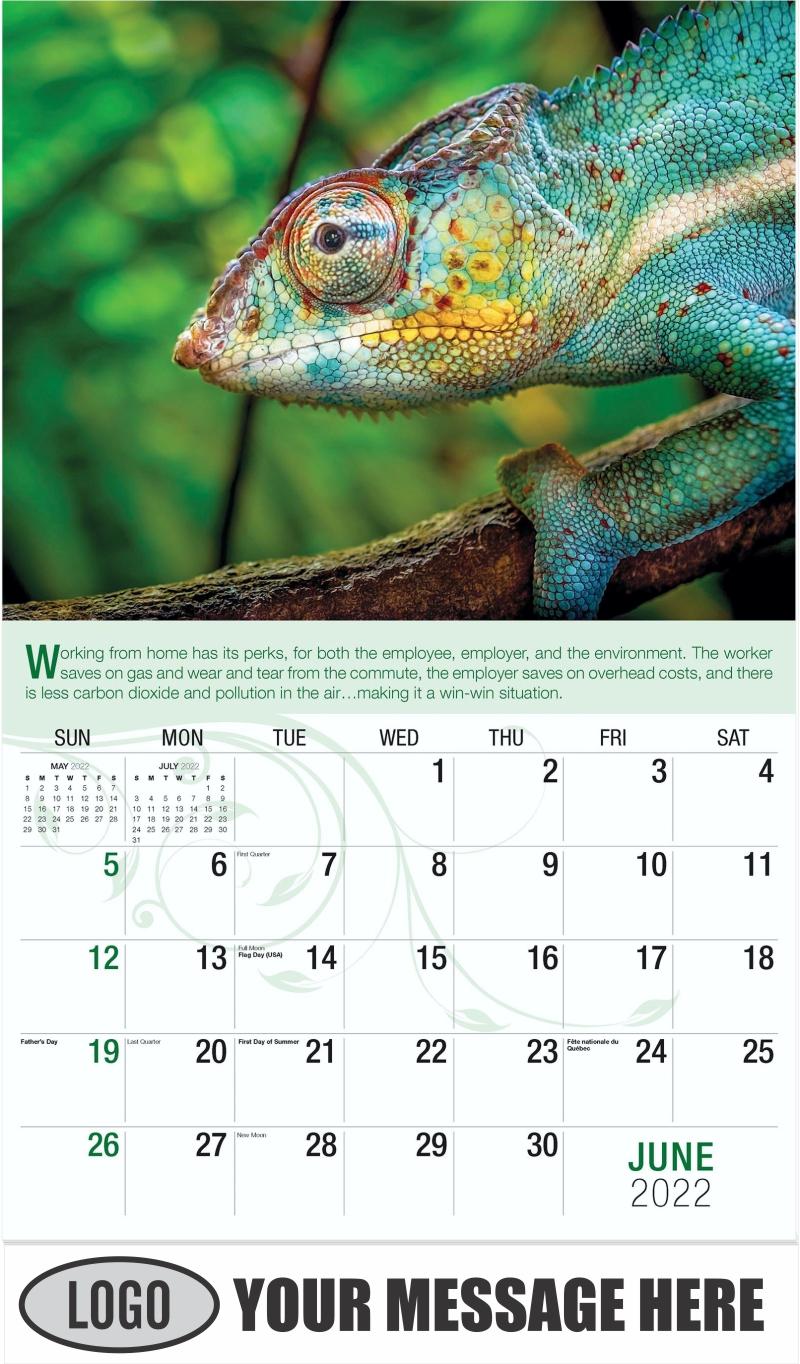 Chameleon On Tree - June - Go Green 2022 Promotional Calendar