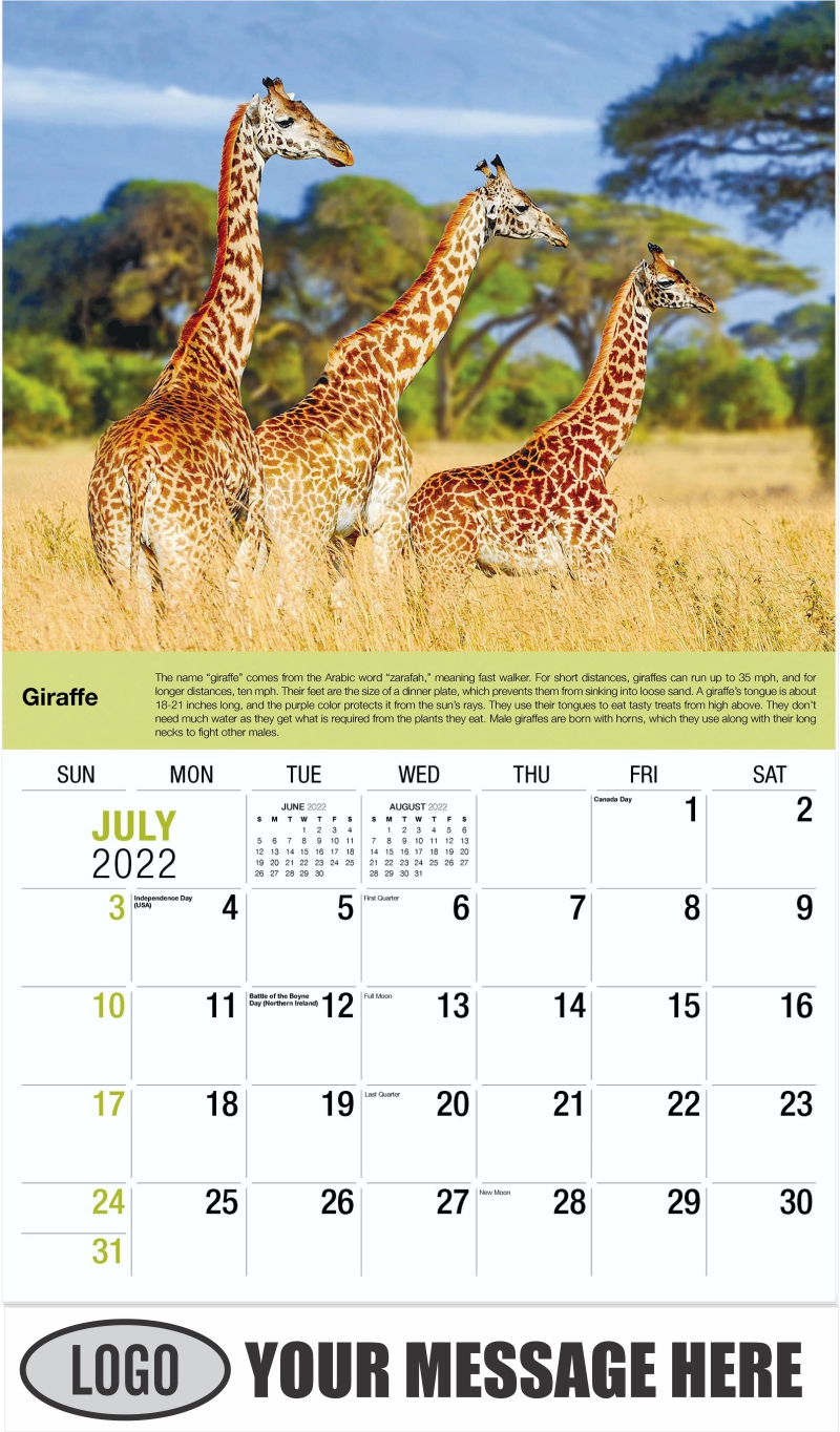 Giraffe - July - International Wildlife 2022 Promotional Calendar
