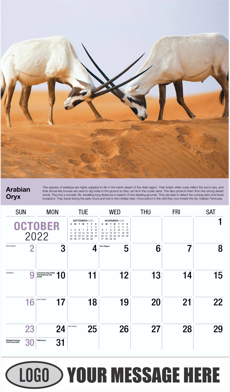 Arabian Oryx - October - International Wildlife 2022 Promotional Calendar