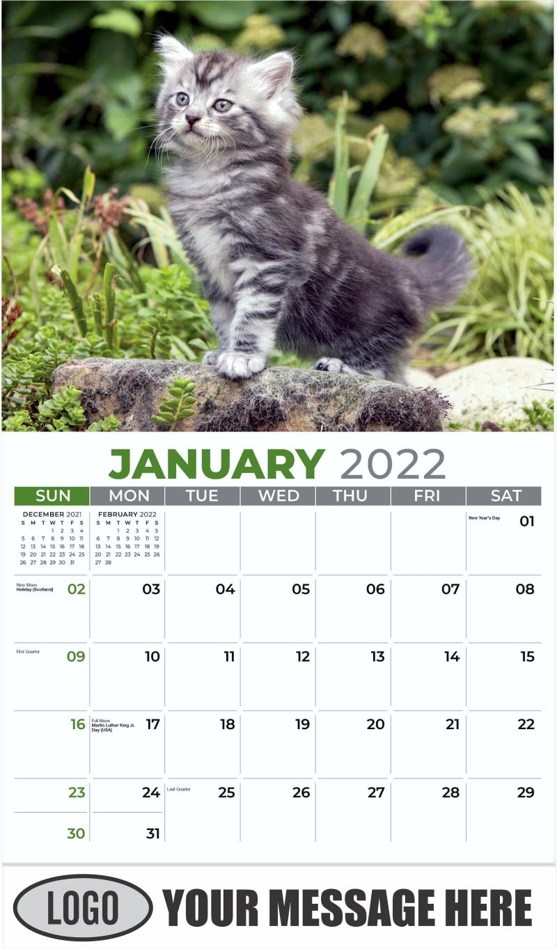 Maine Coon - January - Kittens 2022 Promotional Calendar