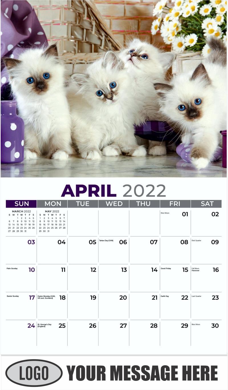 Birman Kittens - April - Kittens 2022 Promotional Calendar