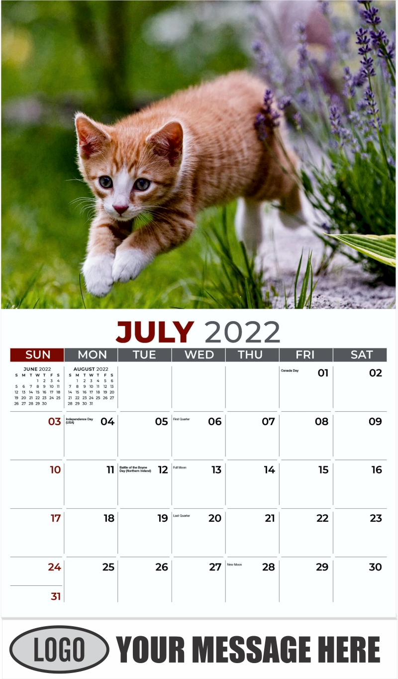 European Shorthair - July - Kittens 2022 Promotional Calendar