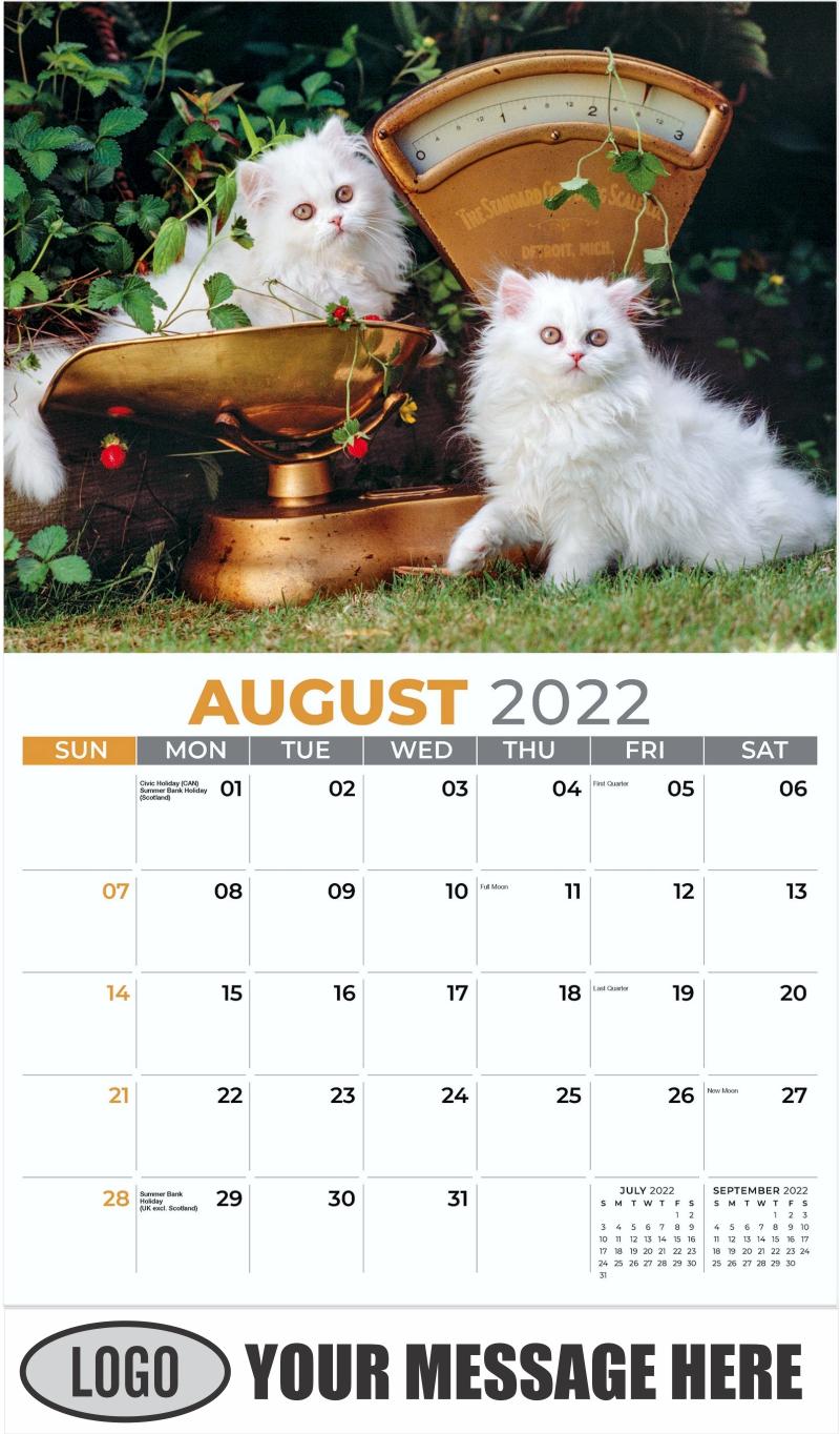 White Biman Kittens - August - Kittens 2022 Promotional Calendar