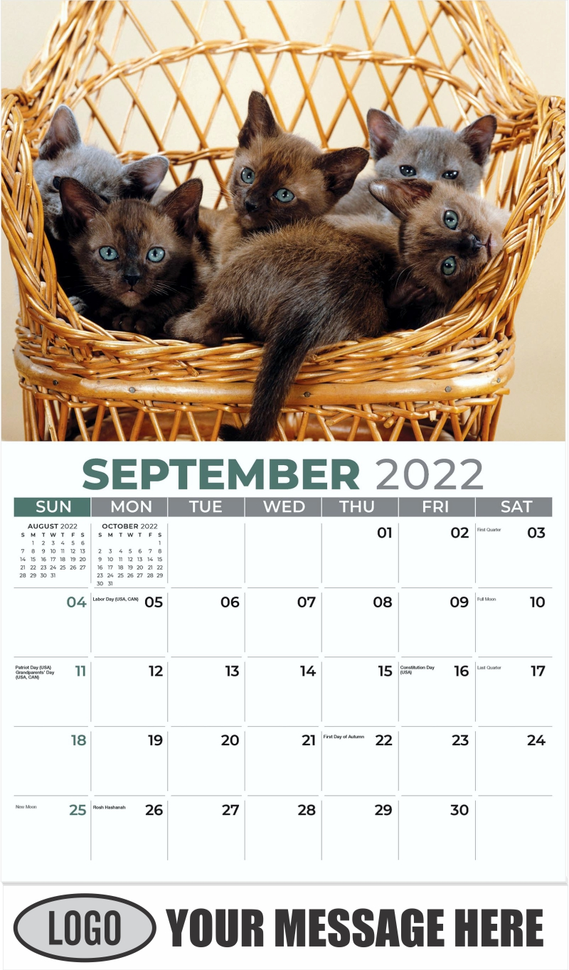 Brown Burmese - September - Kittens 2022 Promotional Calendar
