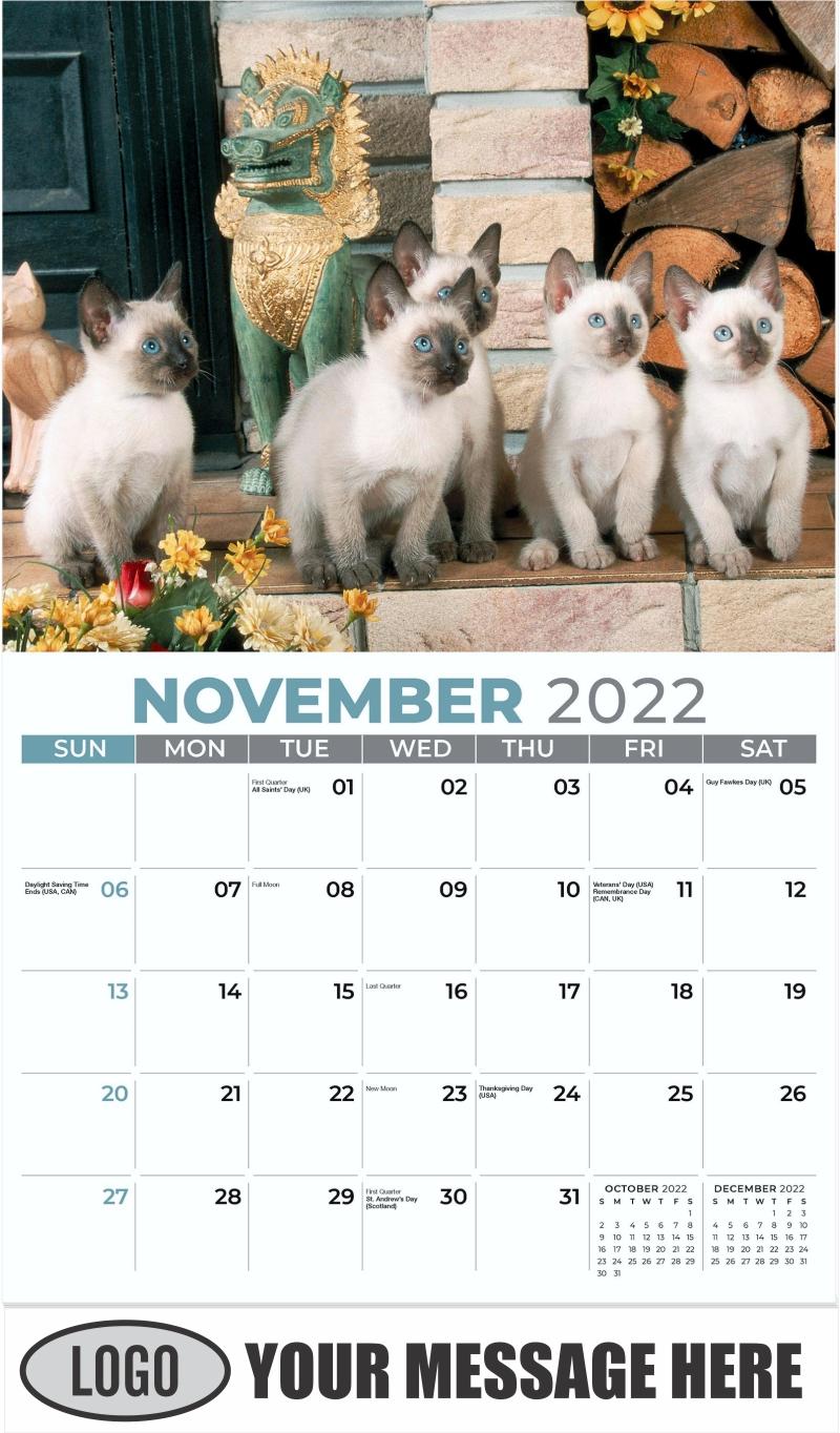 Siamese kittens - November - Kittens 2022 Promotional Calendar