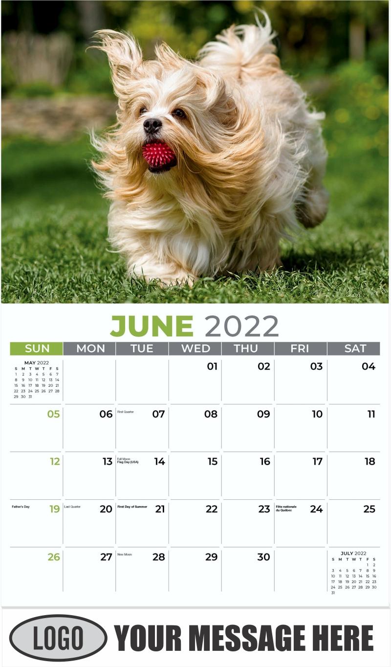 Havanese - June - Pets 2022 Promotional Calendar